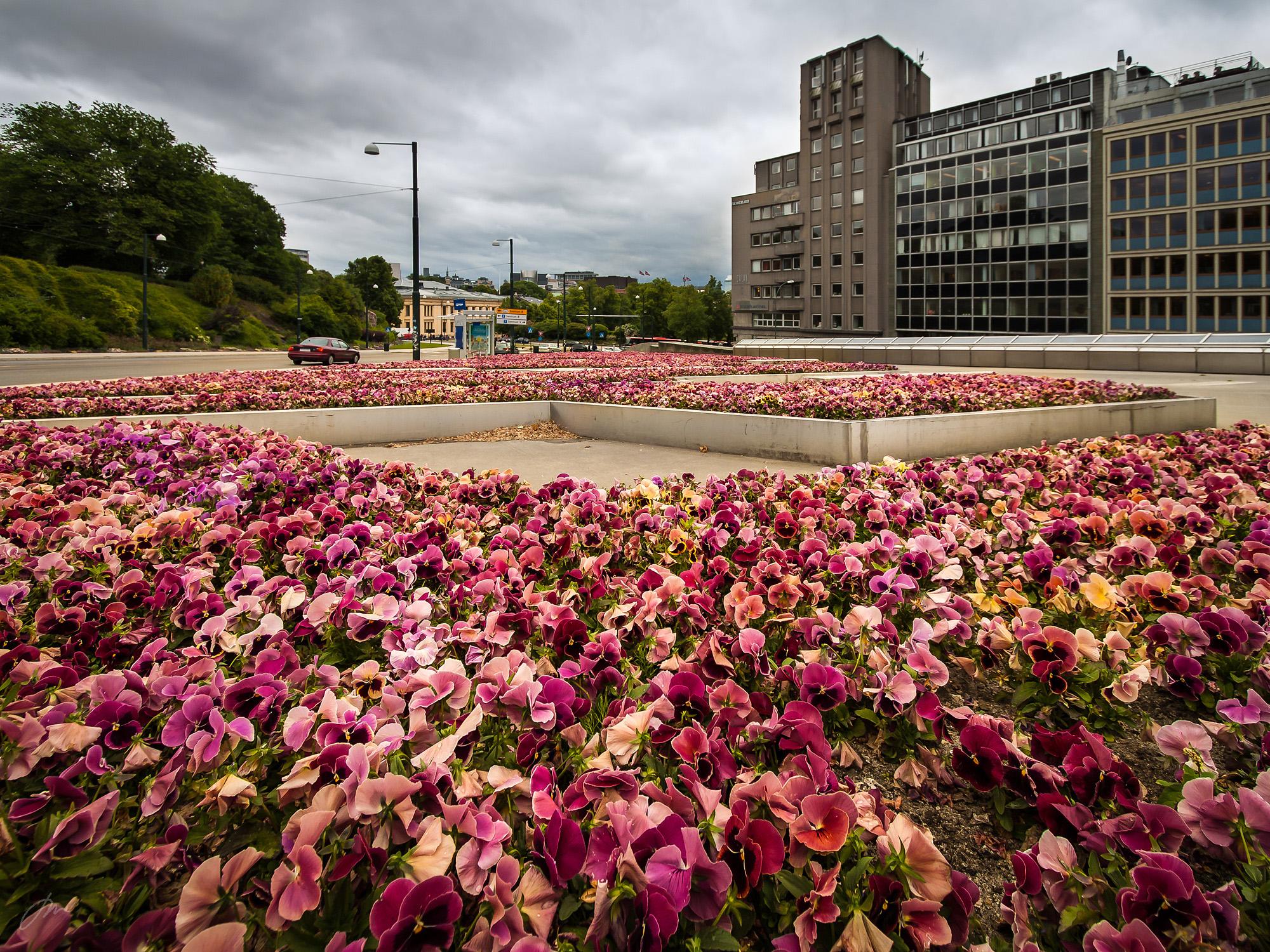 Blomsterhav – ved Utenriksdepartementet
