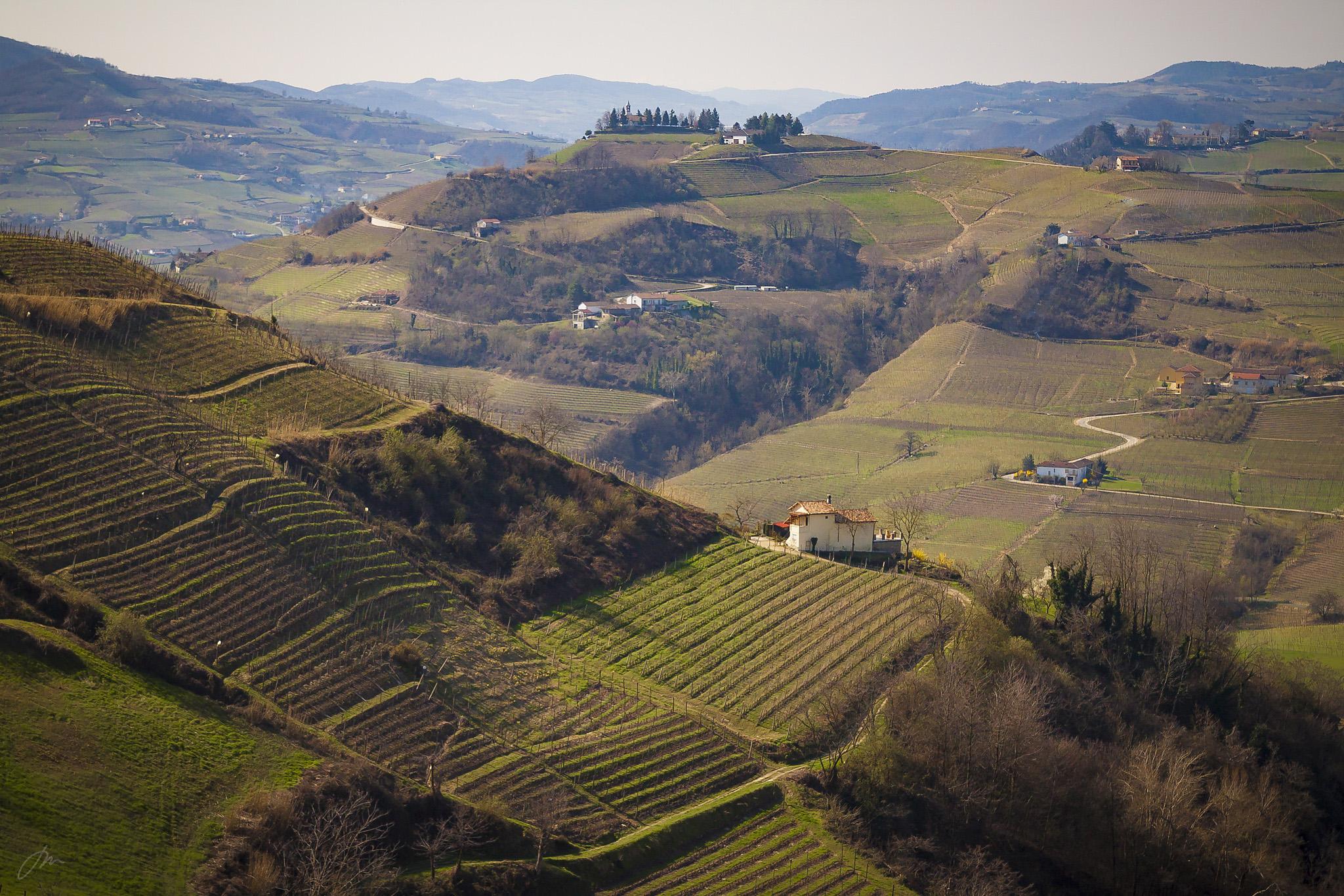 Vinmarker, Piemonte