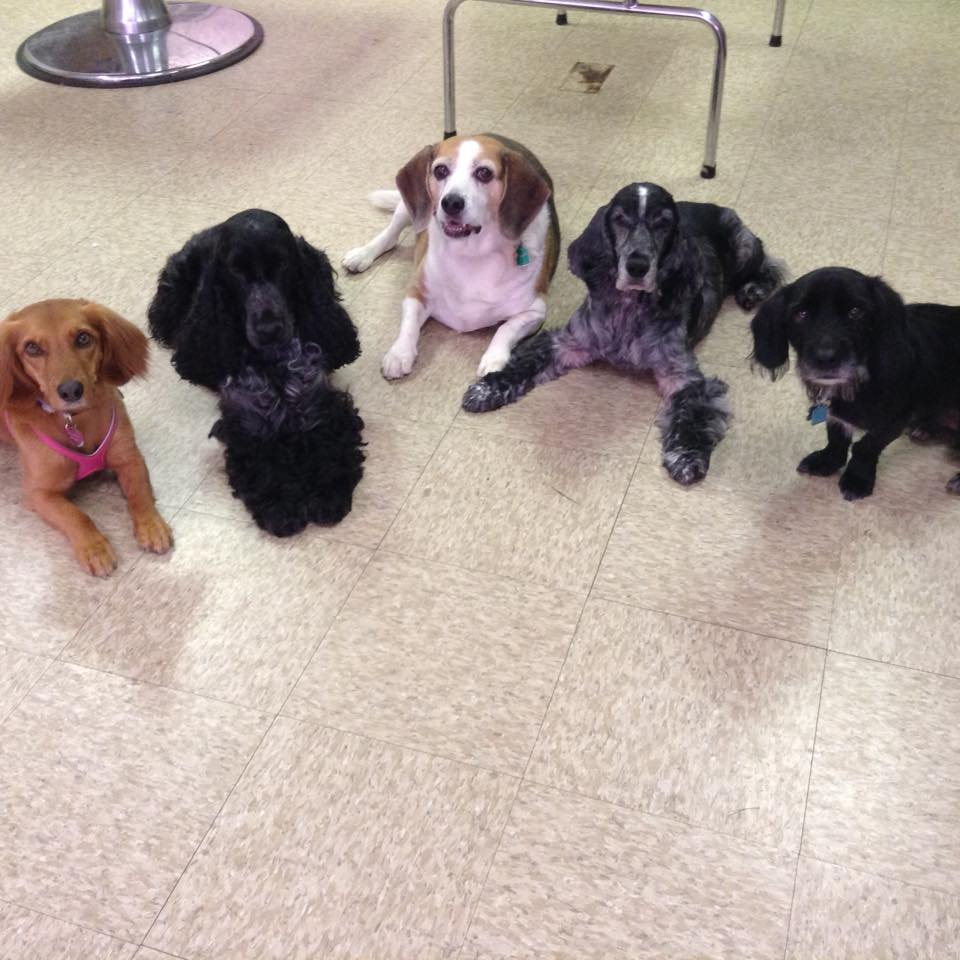 """A group of dogs practice their stay at MJ's.Only when they hear the finsihed signal """"Break"""" will they get up."""