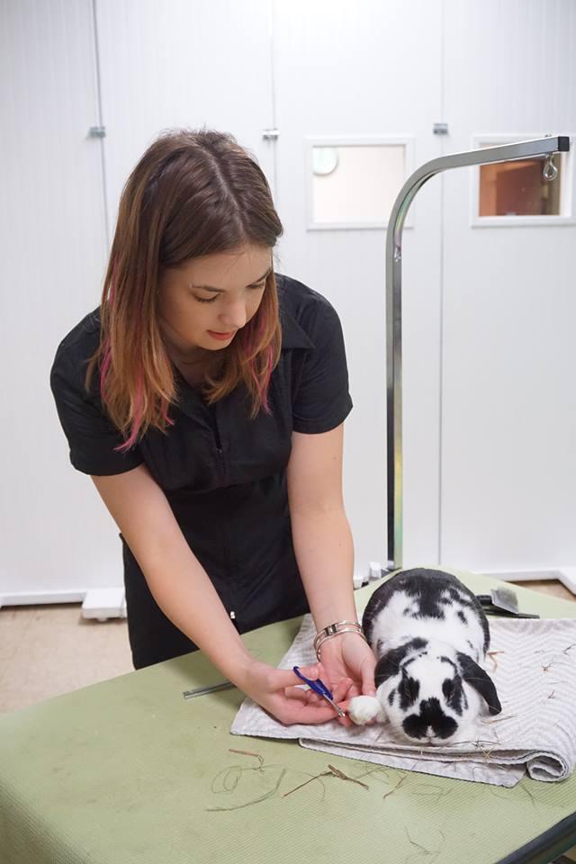 rabbit+grooming+12.jpg