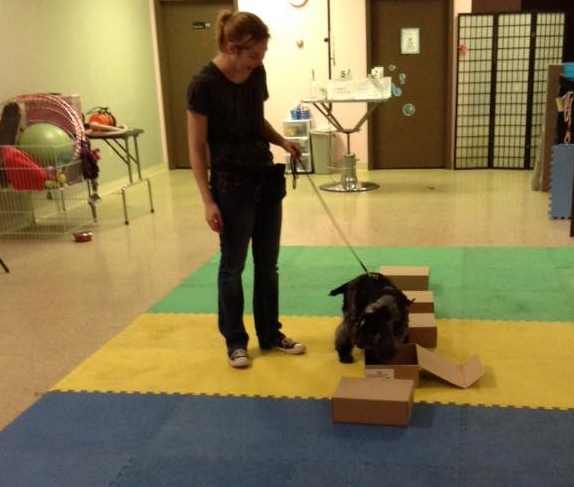 Detection Dog Games