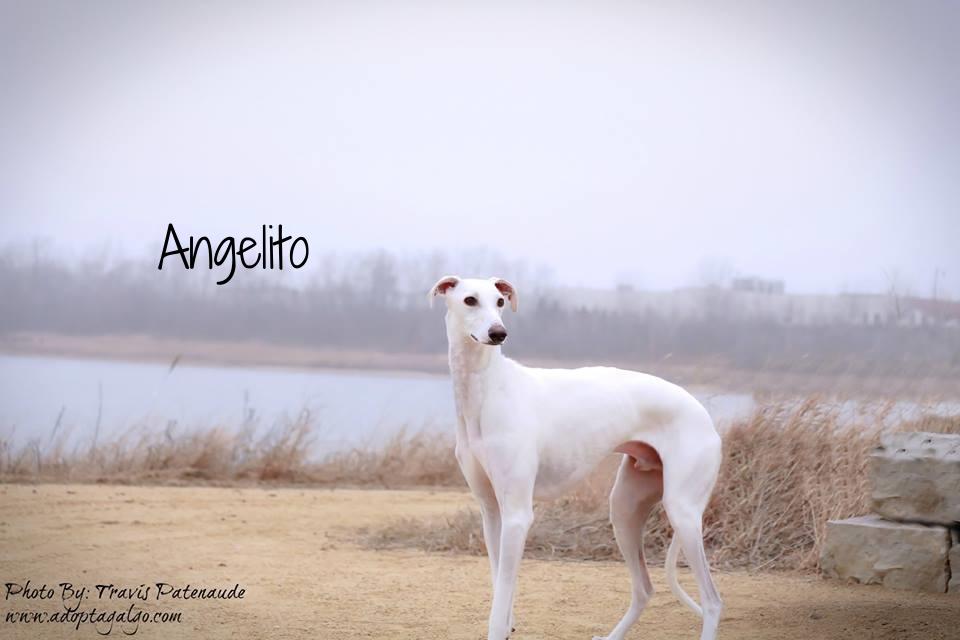 Copy of Angelito