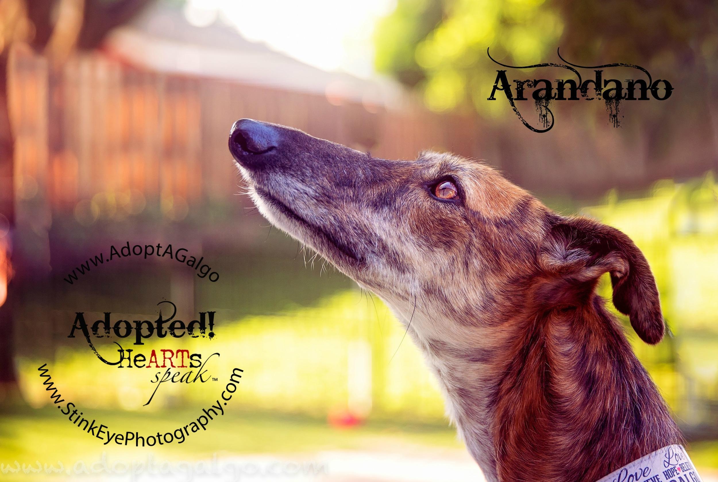 Arandano-Adopted.jpg