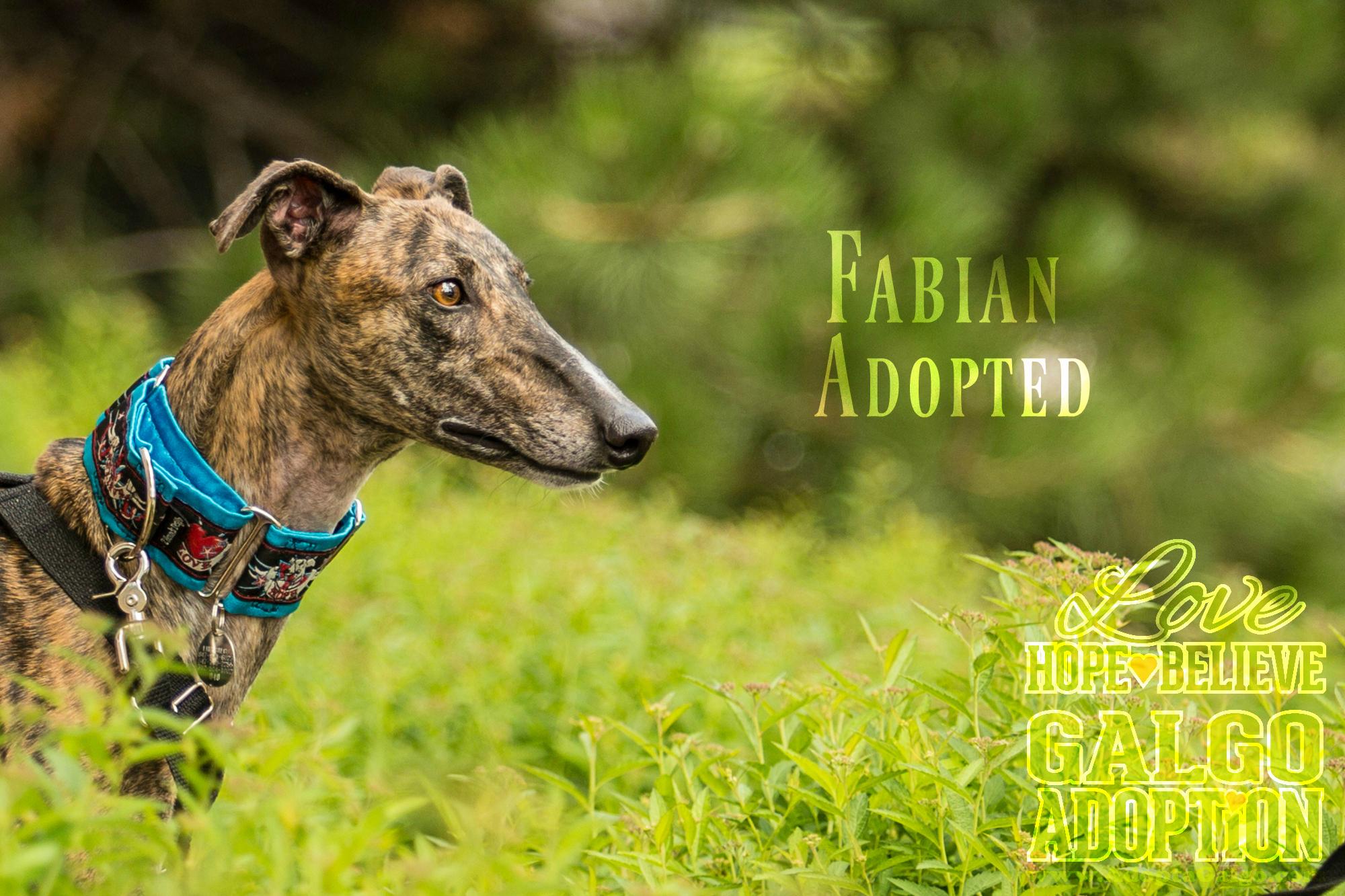 LHBGA-Fabian-Adopted.jpg