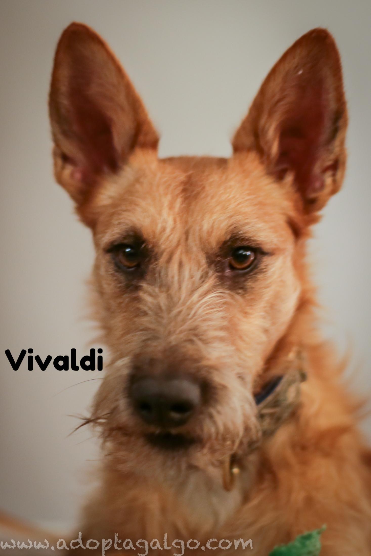 LHB-Vivaldi-9075.jpg