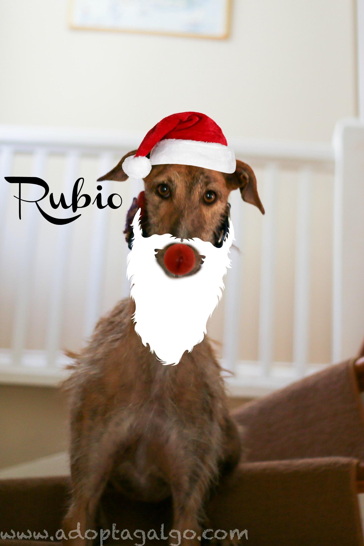 LHB-Rubio-Adopted.jpg