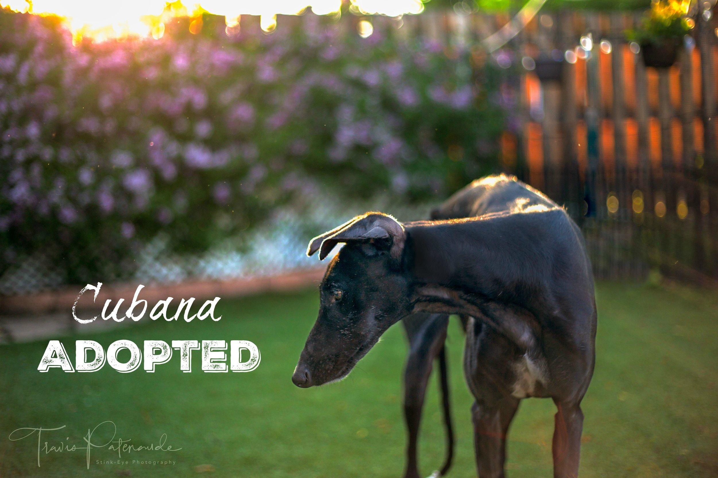LHBGA-Cubana.Adopted.jpg