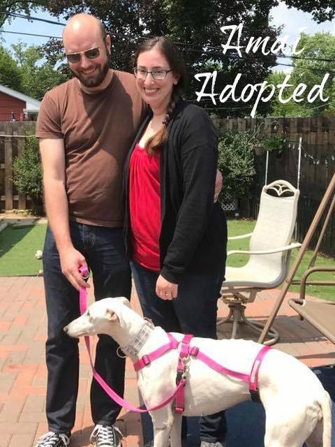 Amai.Adoption.jpg