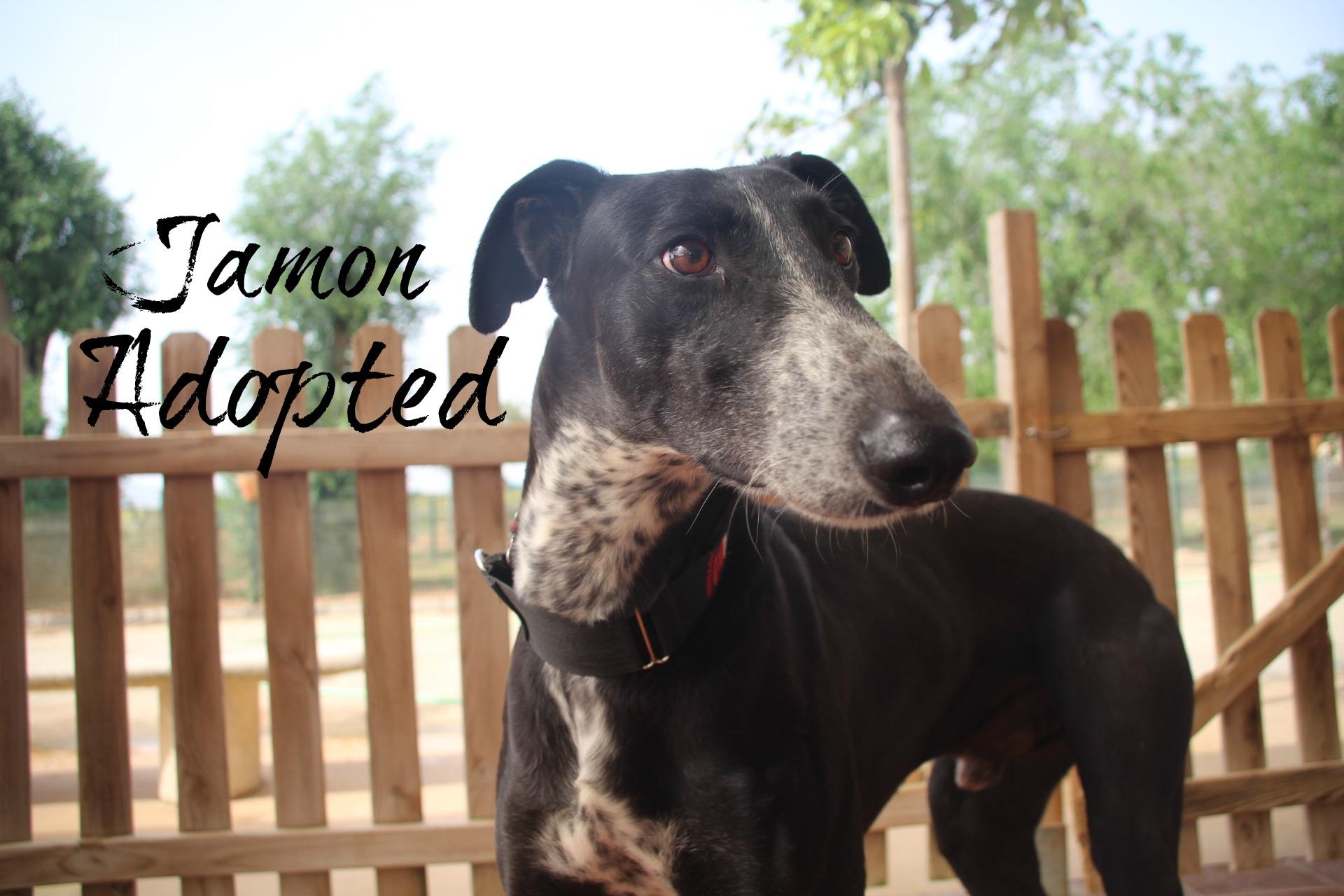 Jamon -Adopted.jpg