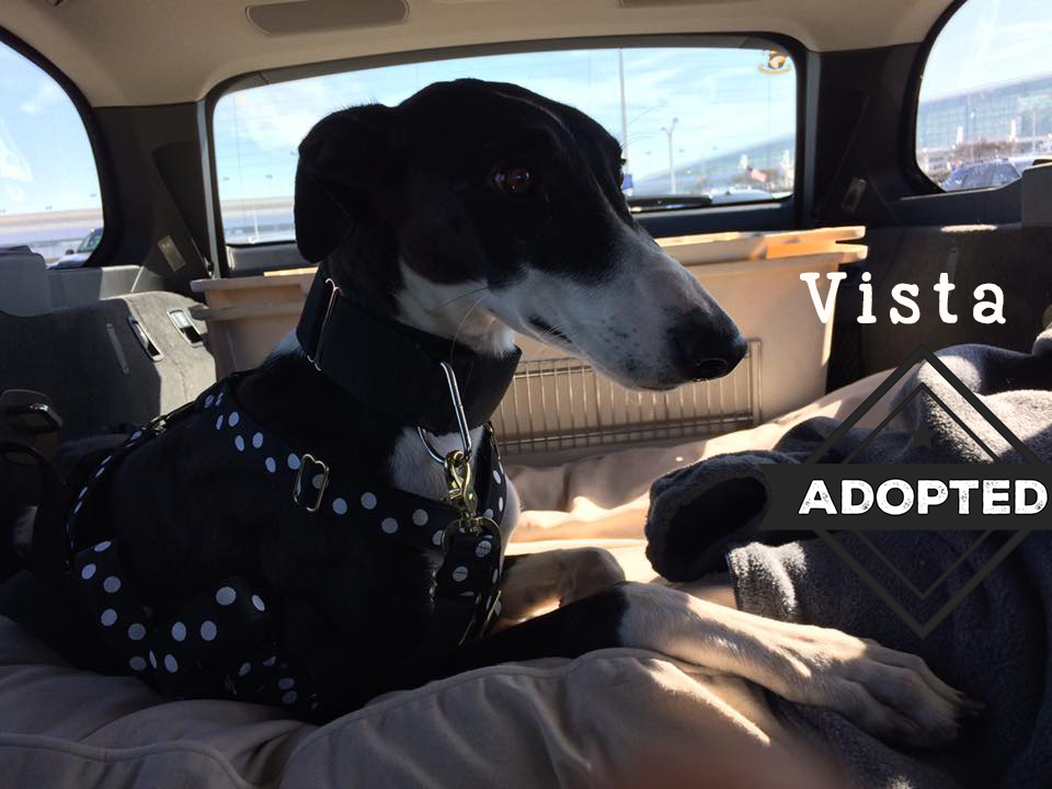 Vista.Adopted.jpg