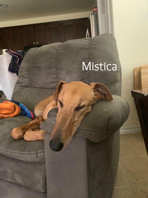 Mistica.Adopted.jpg