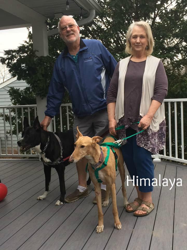 Himalya.adopted.jpg