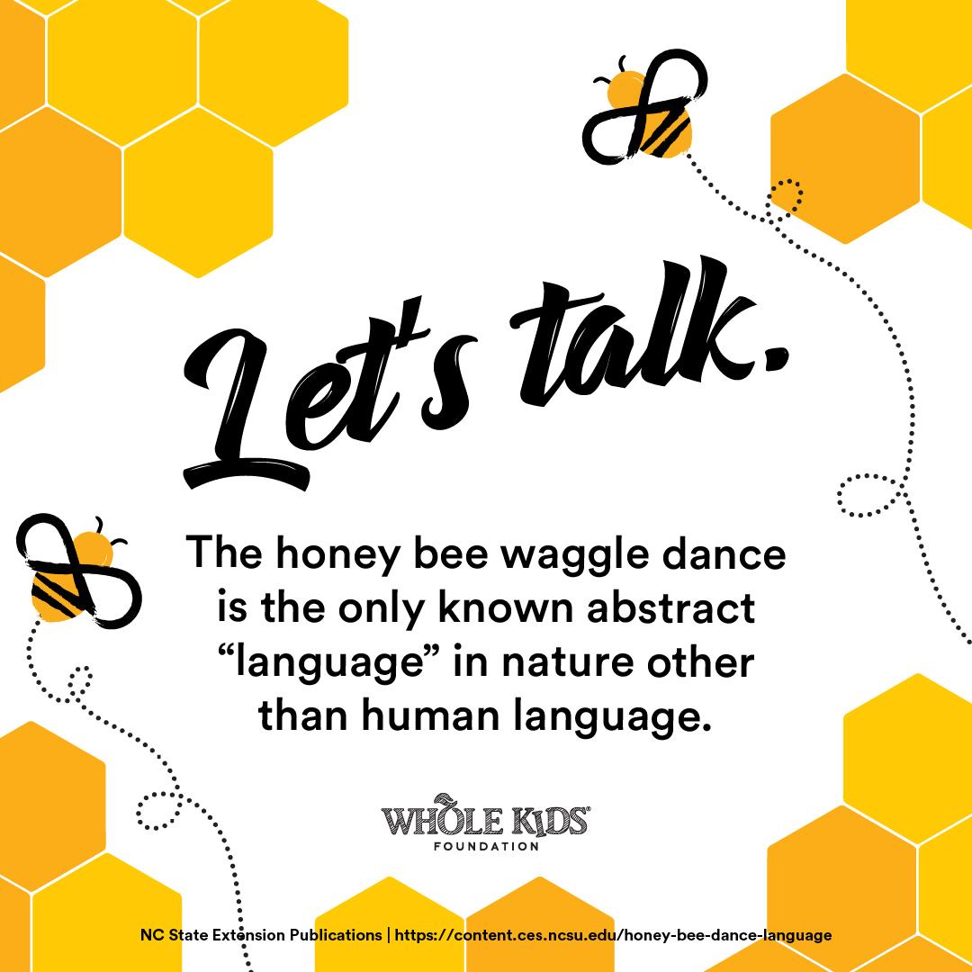 WkF_2019_BeeCampaign_Social_1080x1080-11.jpg