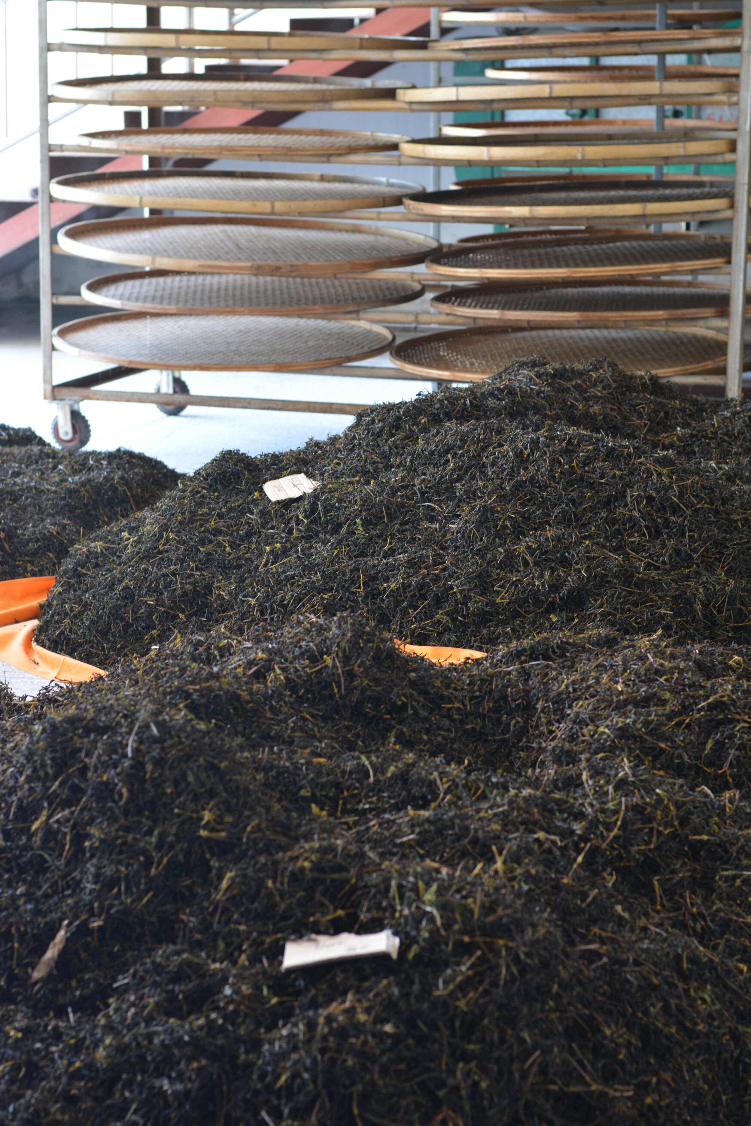 Then the leaves are oxidized in an oven-like machine and left out to dry. Depending on the tea type and desired taste profile, the tea master will repeat the process with the same leaves many times over a period of months.