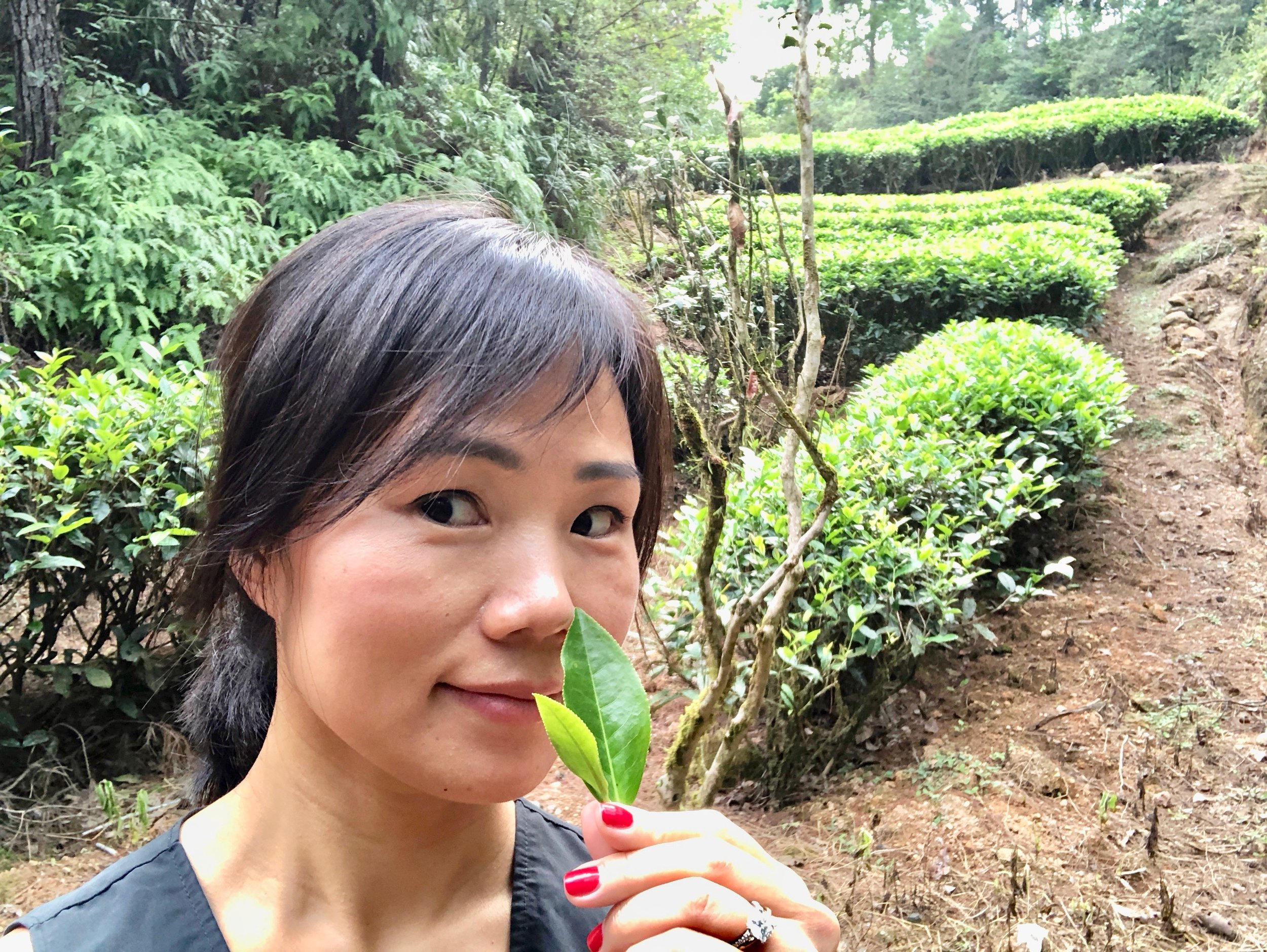 Loving every intoxicating inhalation of tea leaves on Wuyi Mountain!