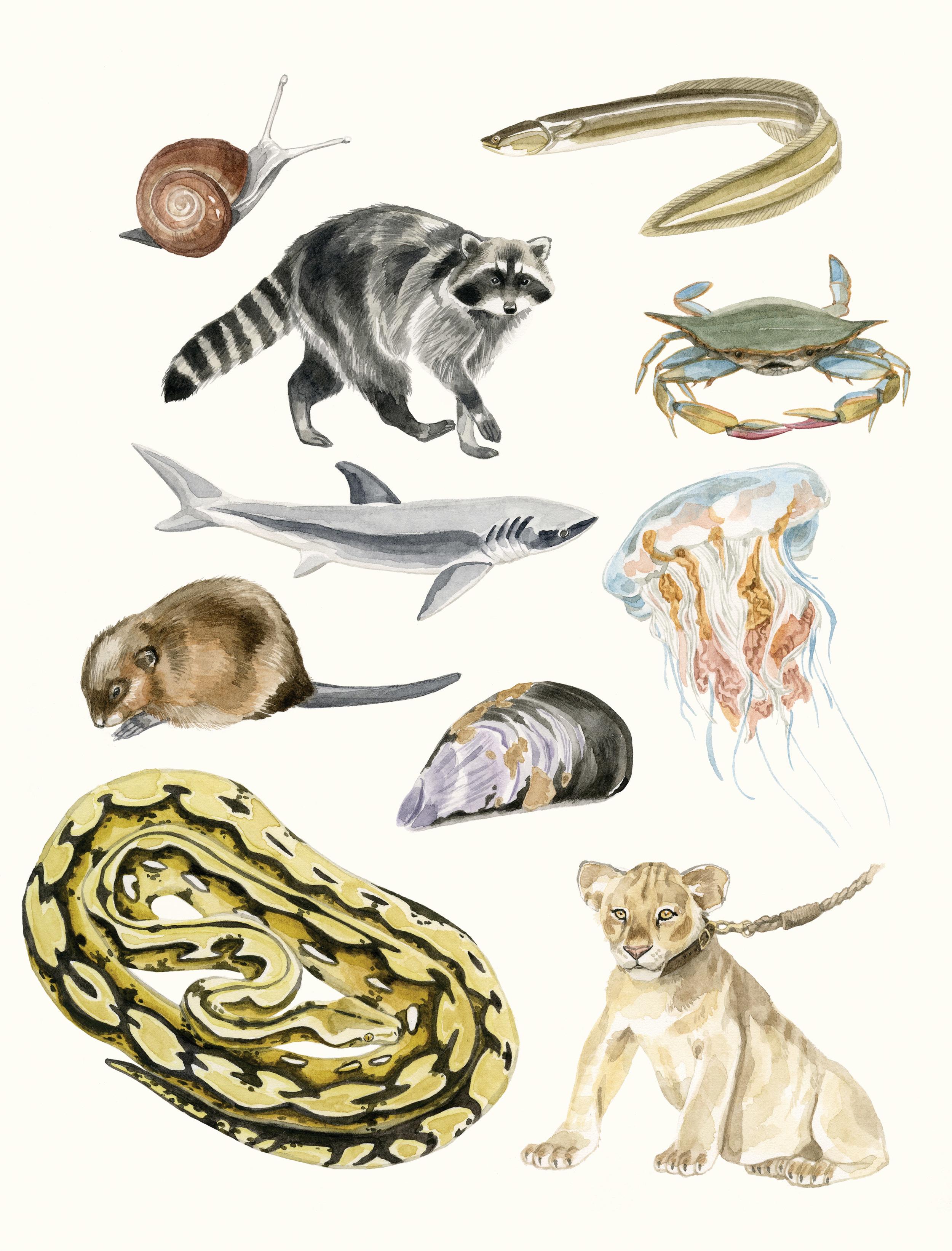 1-animals-sealife.jpg