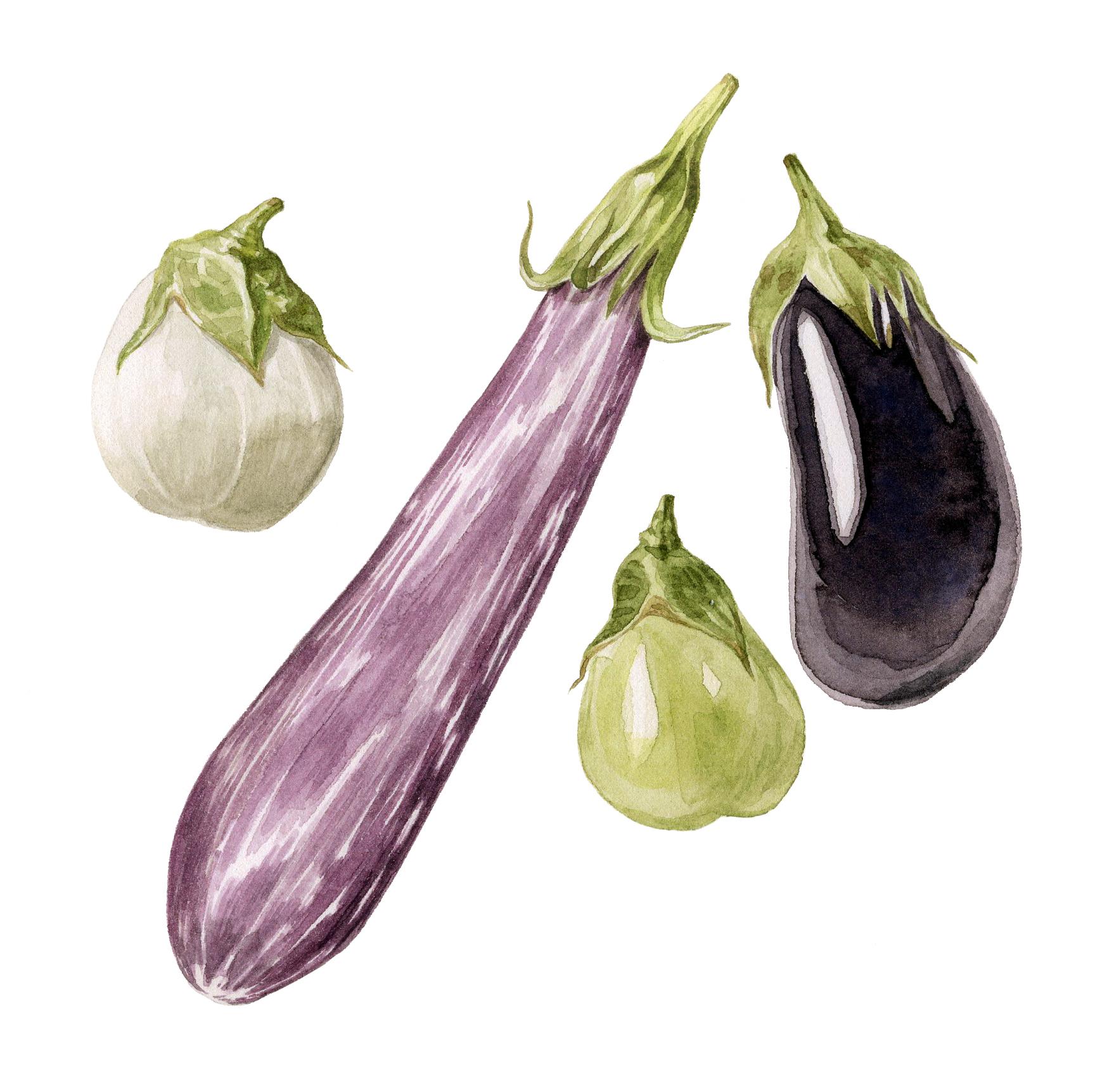 7-eggplant.jpg