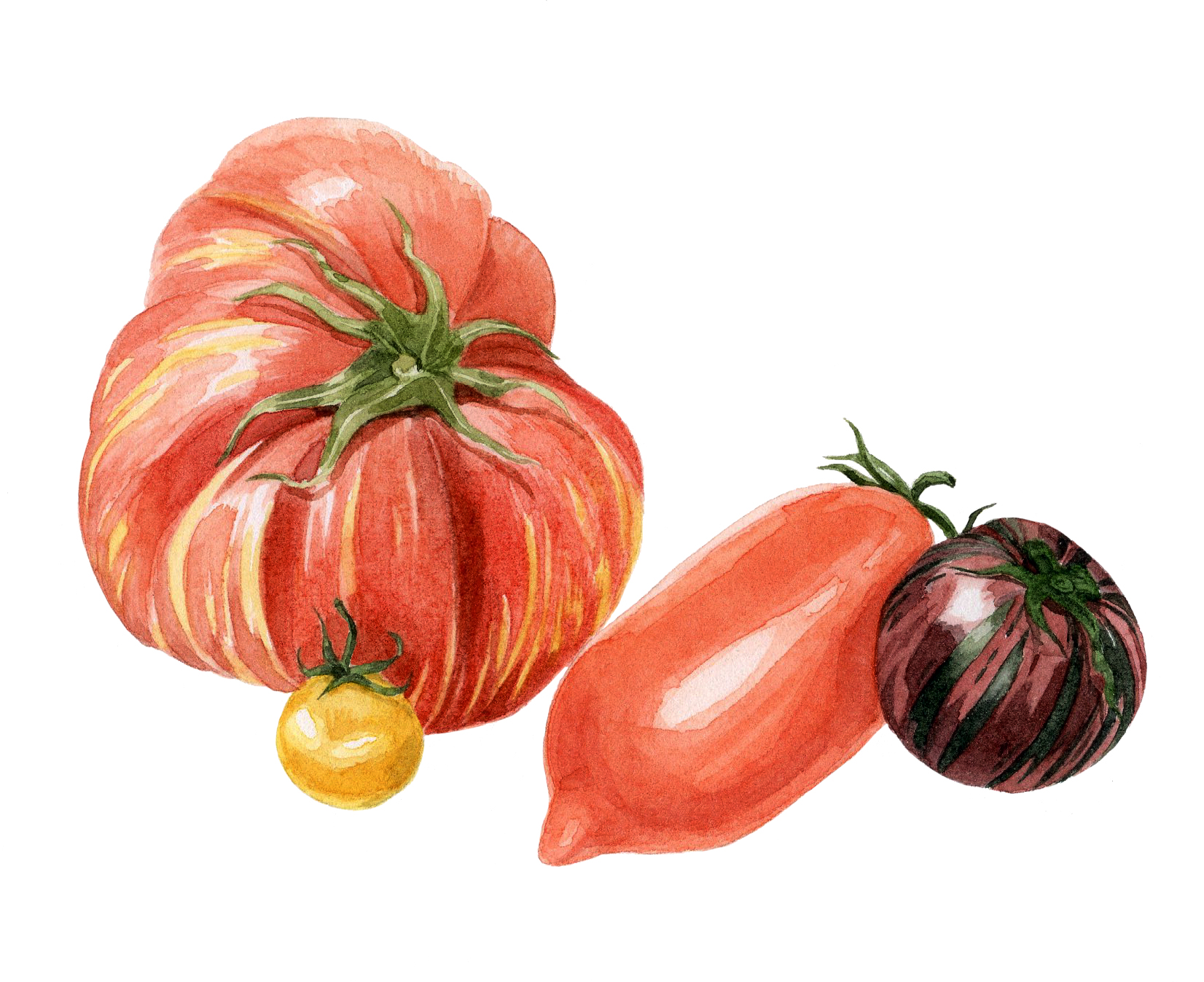 10-tomatoes.jpg