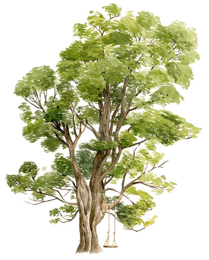 maple-tree-sm.jpg