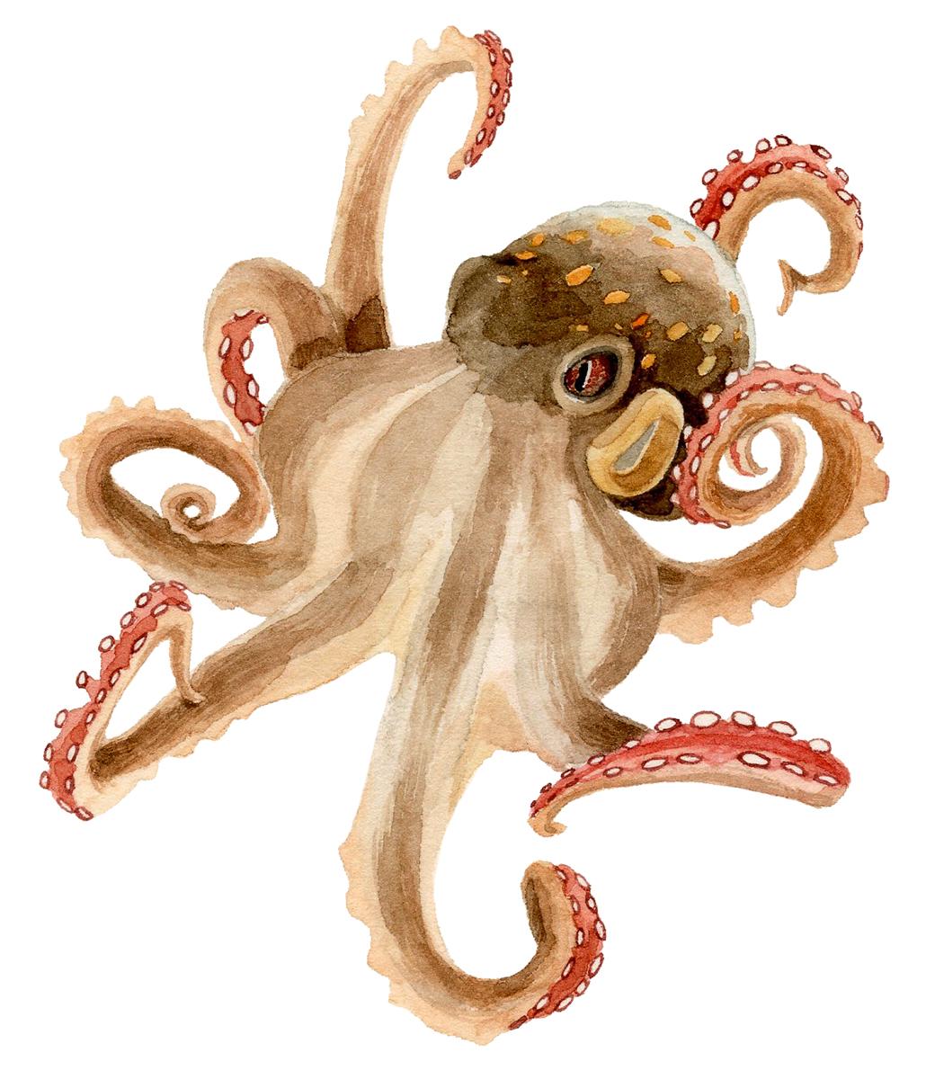 2-3-octopus-sm.jpg