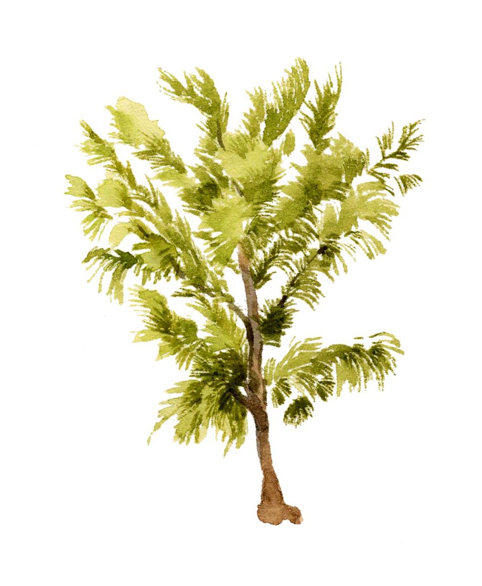 1-4-tree-lrg.jpg