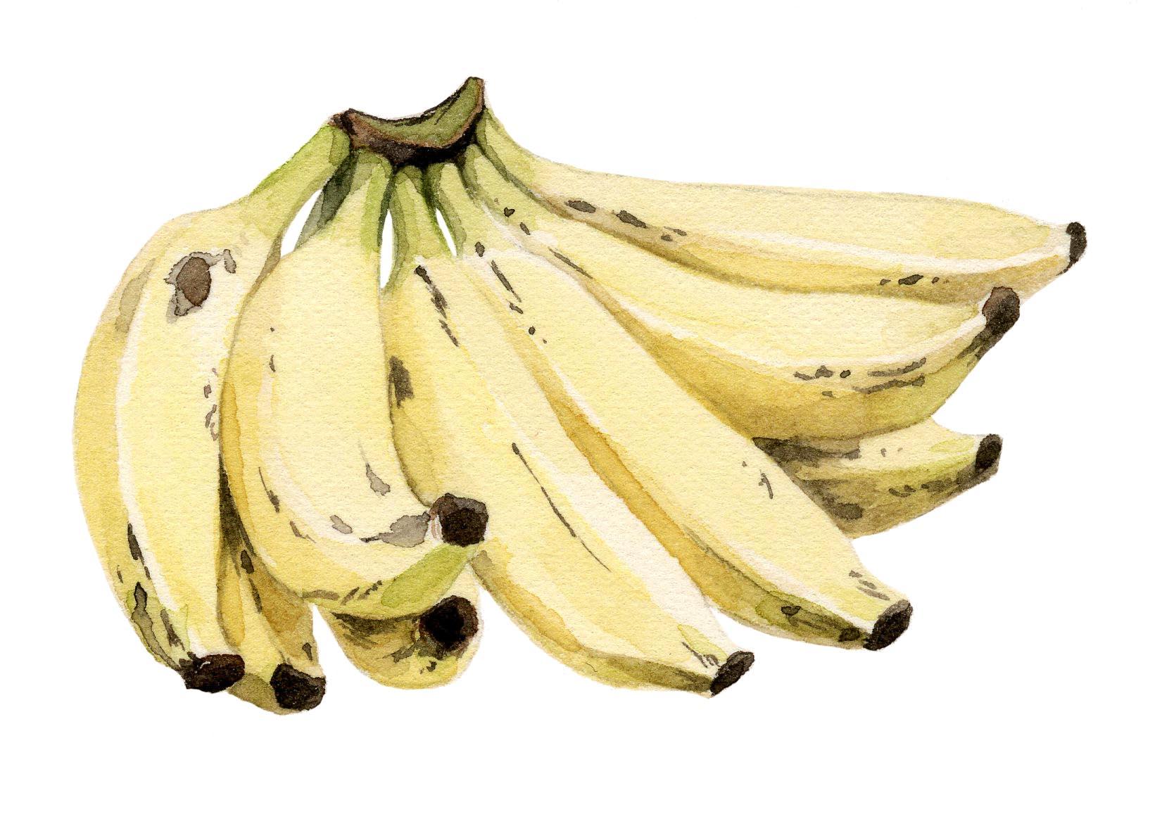 NYT-bananas-lrg.jpg