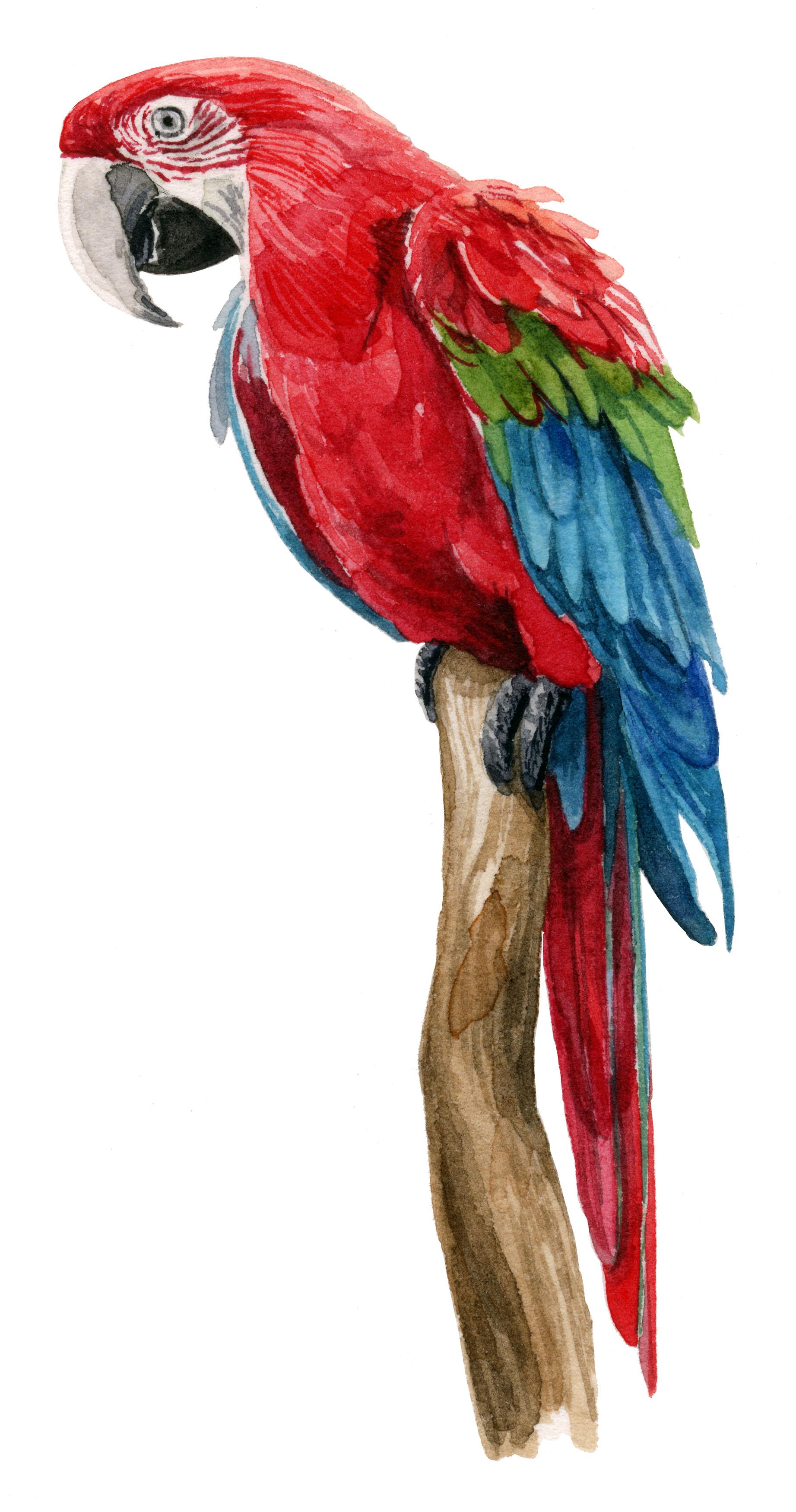macaw-web.jpg