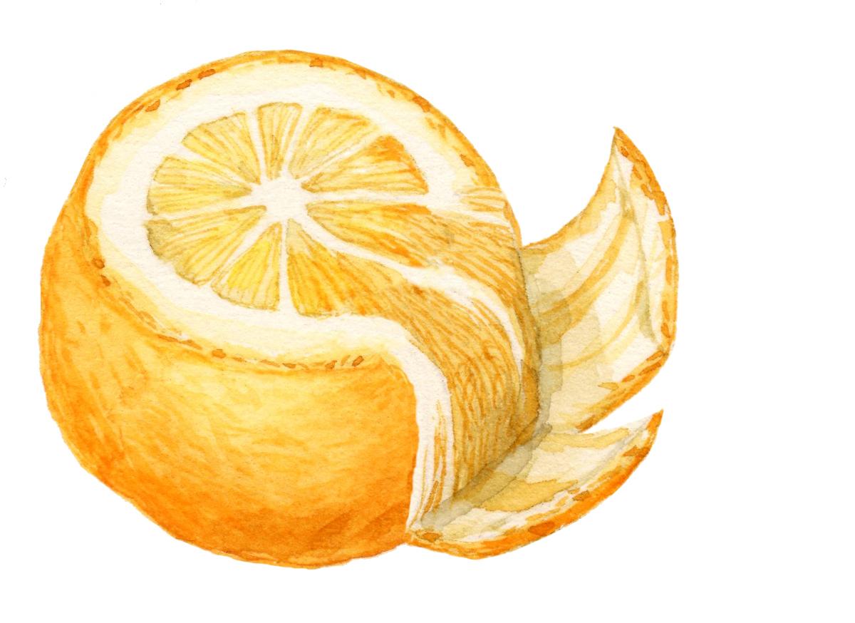 orange2-lrg.jpg