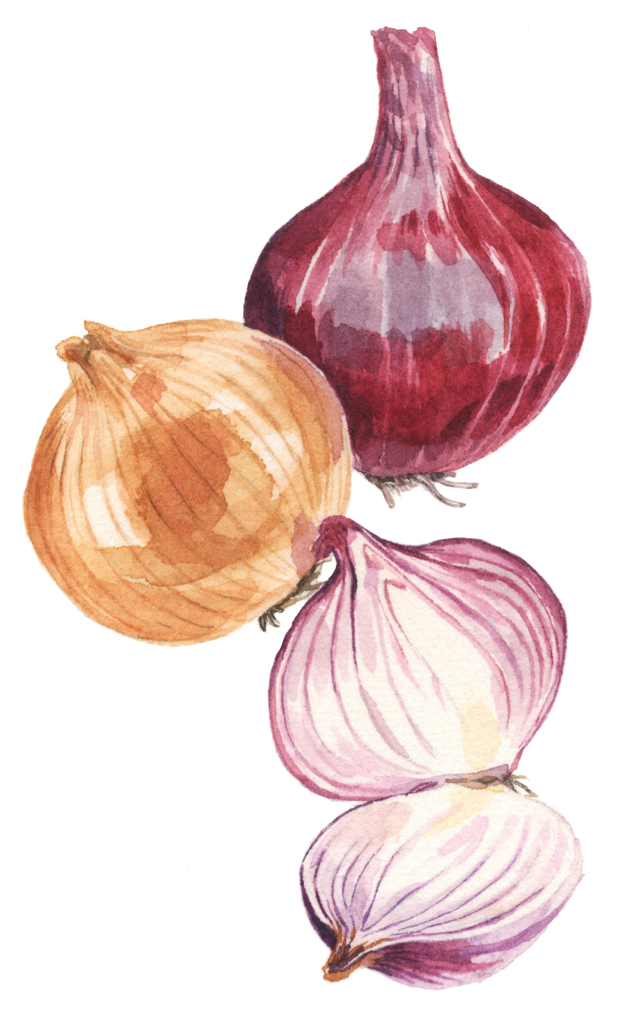 onions-lrg.jpg