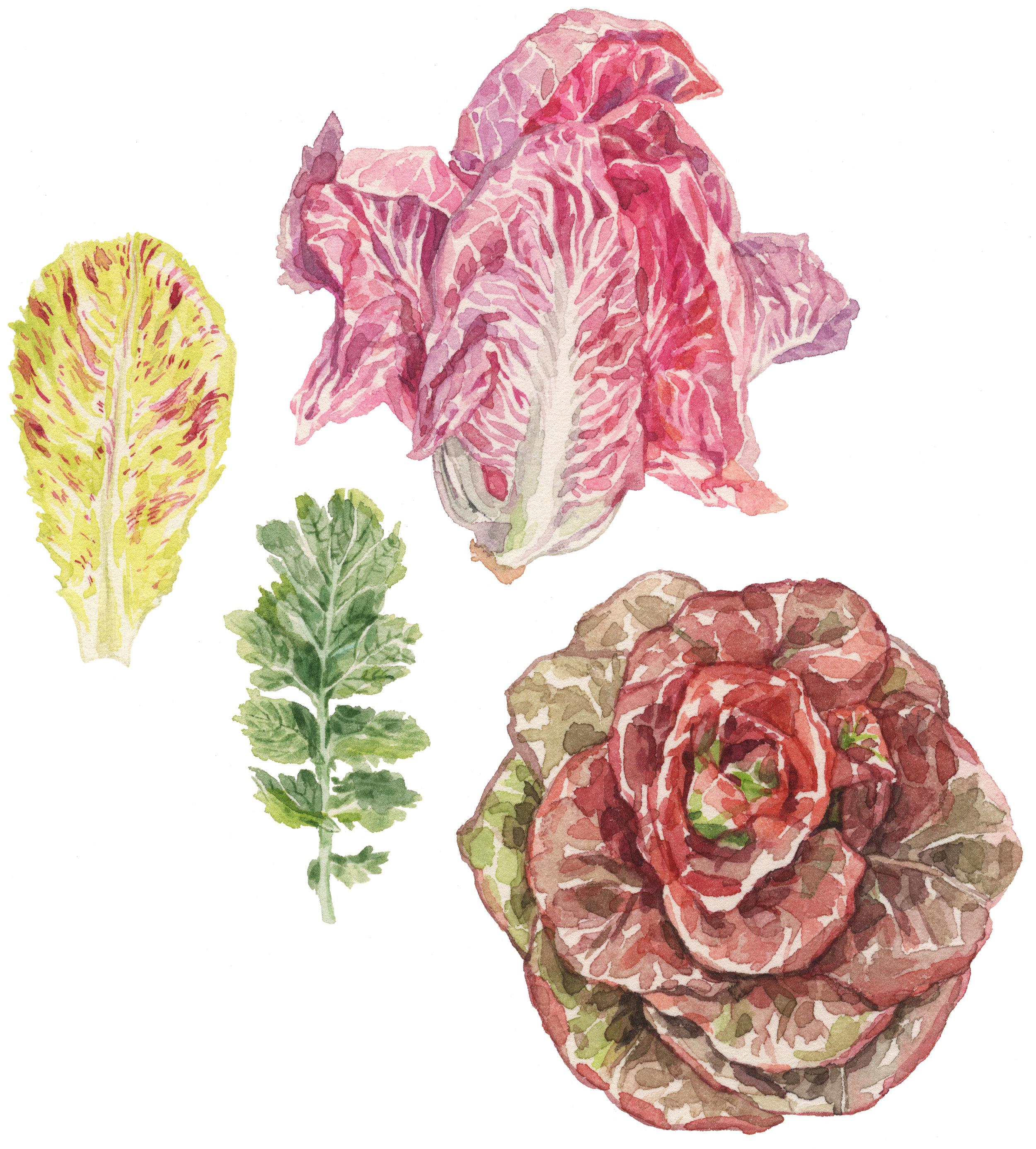 5-lettuces-lrg.jpg