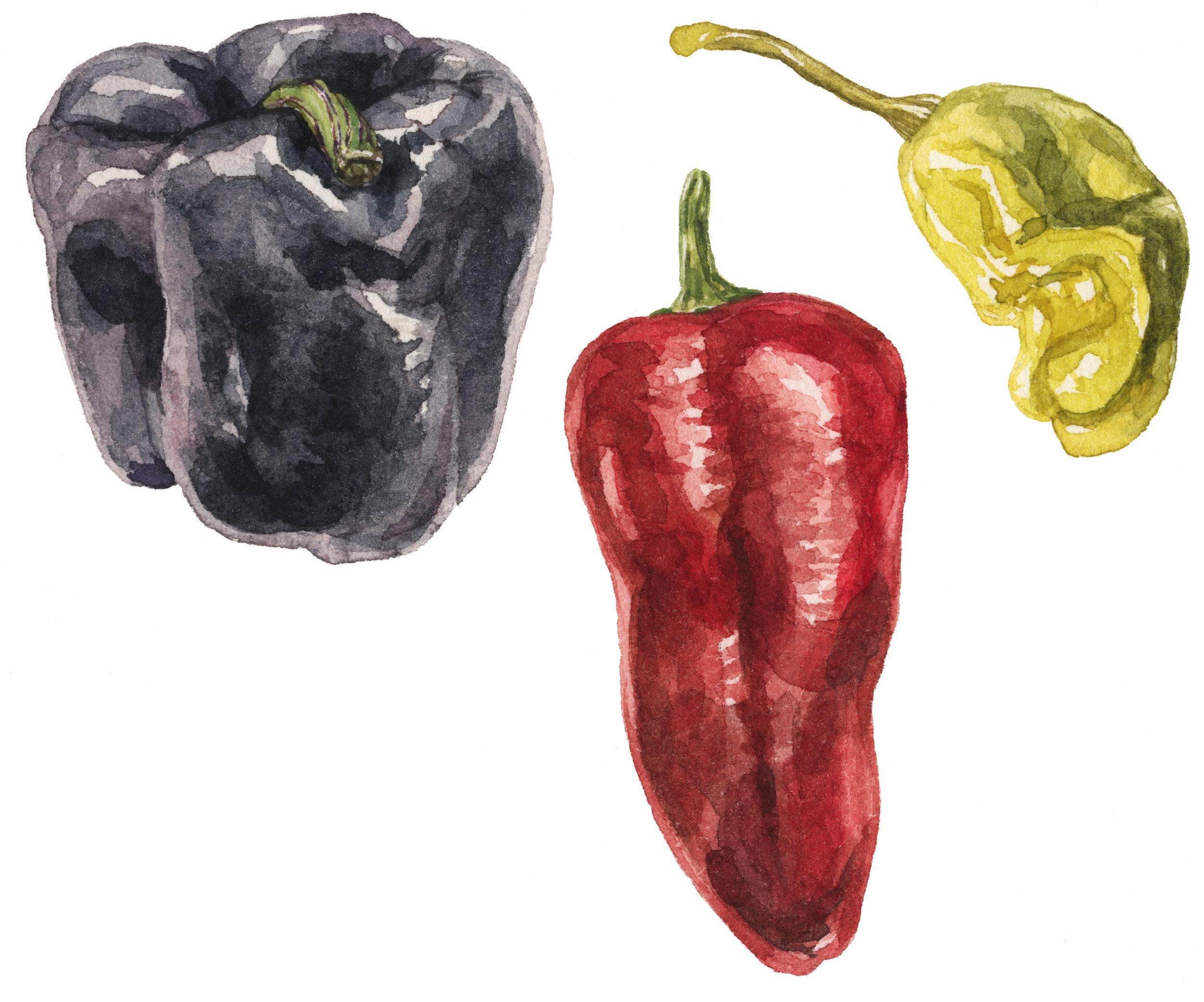 22-sweet-peppers-lrg.jpg
