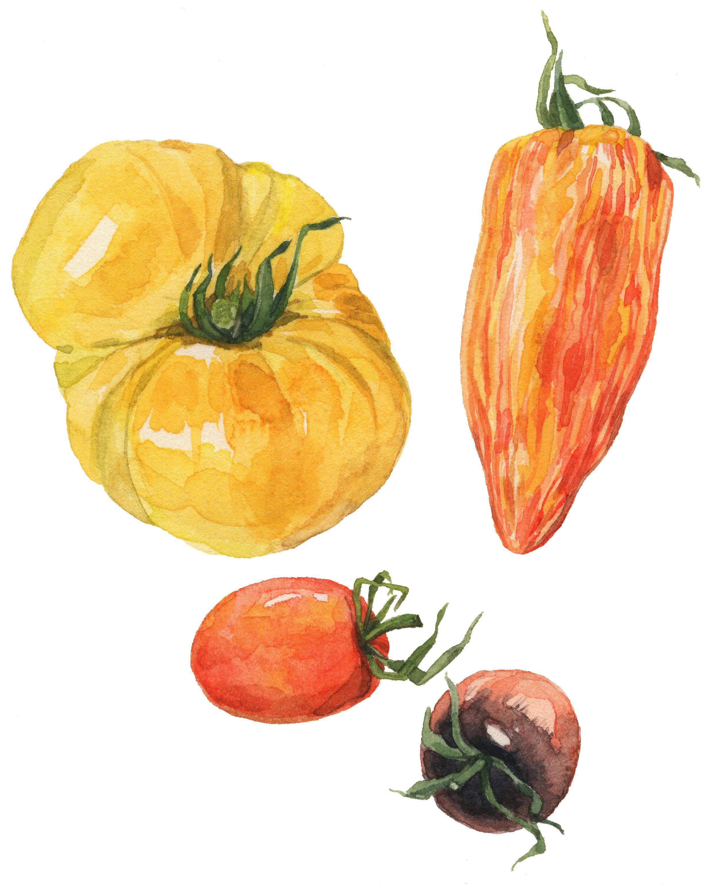 24-tomatoes-lrg.jpg
