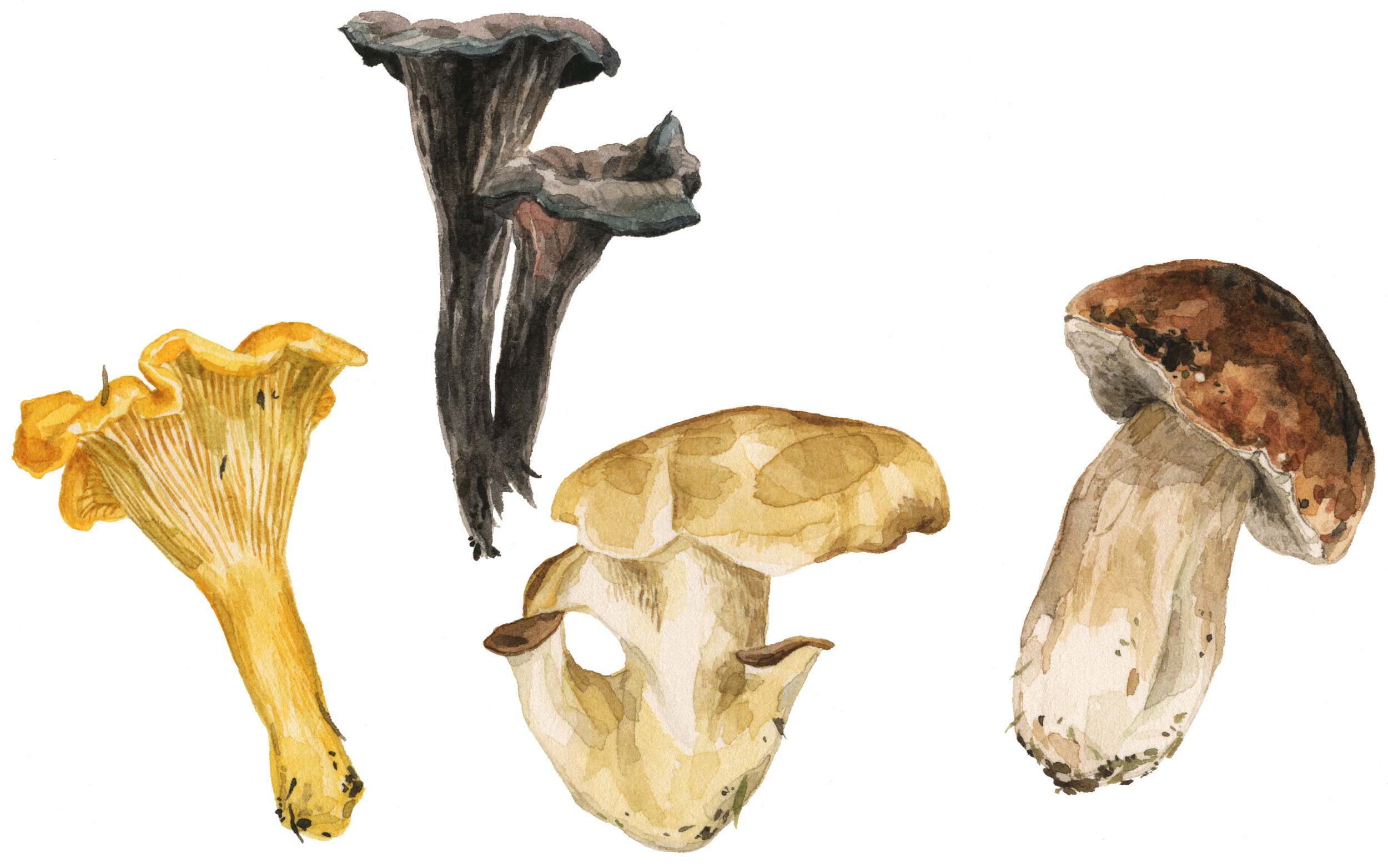 31-mushrooms-lrg.jpg