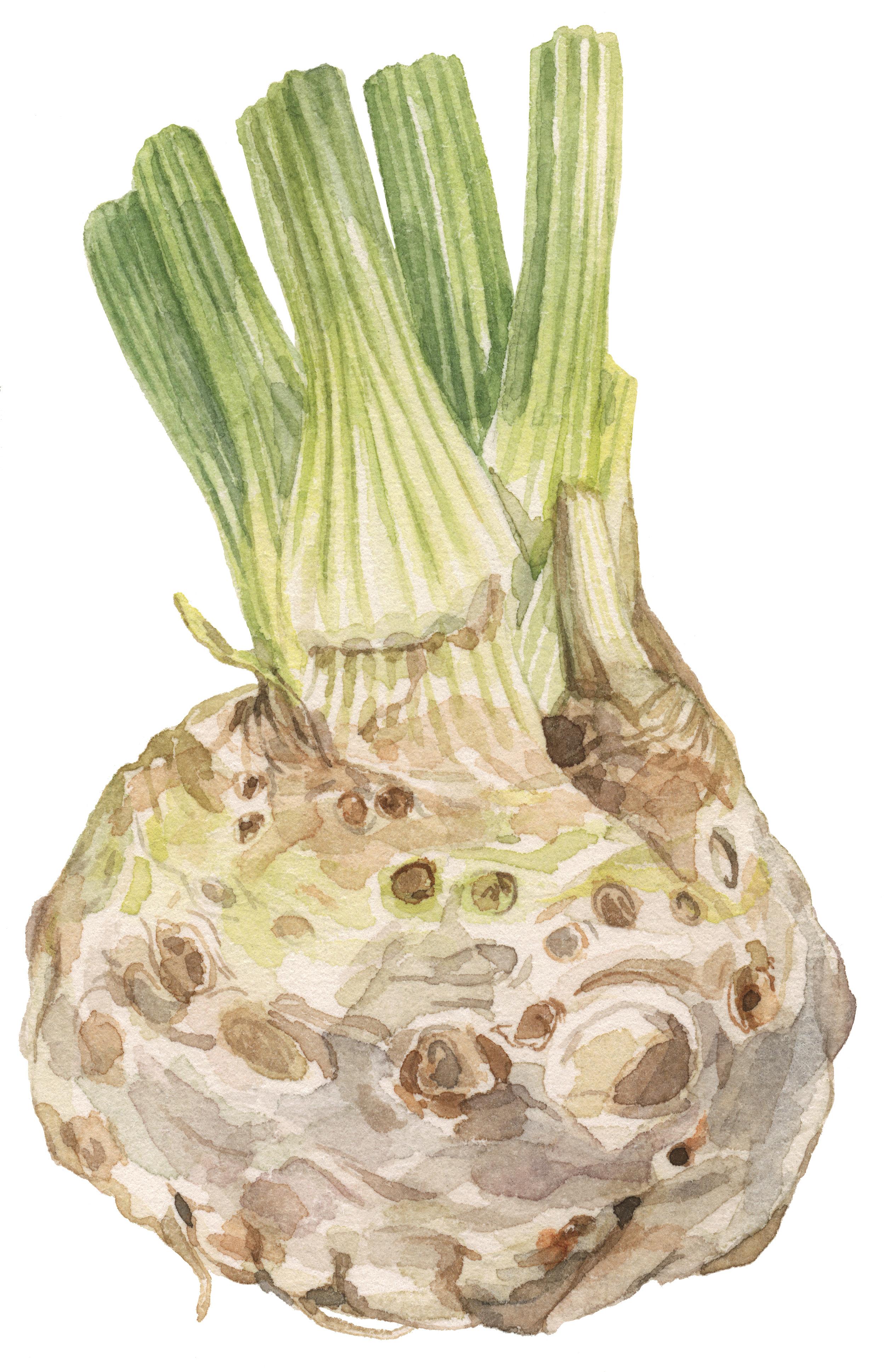 33-celery-root-lrg.jpg