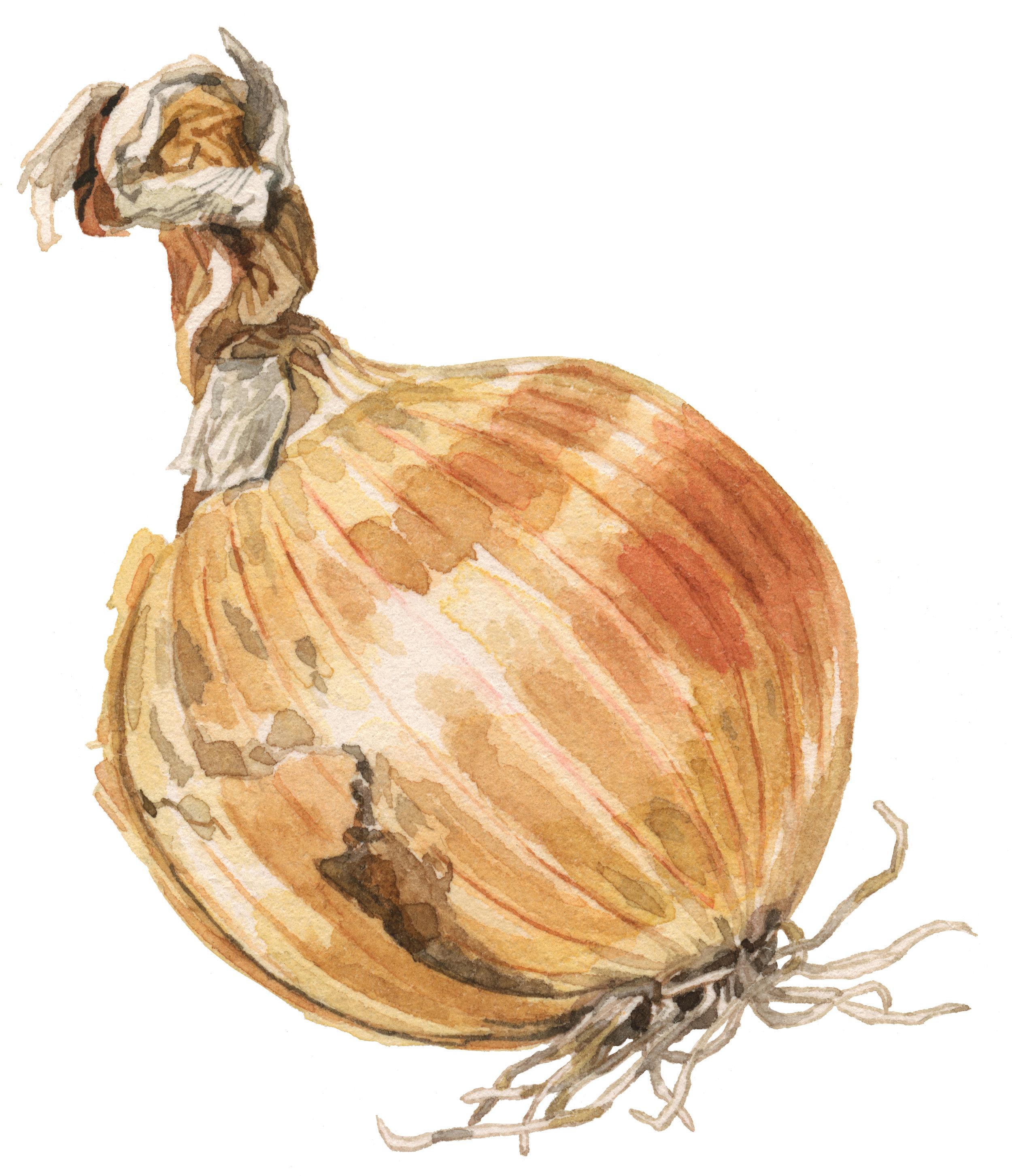 35-onion-storage-lrg.jpg