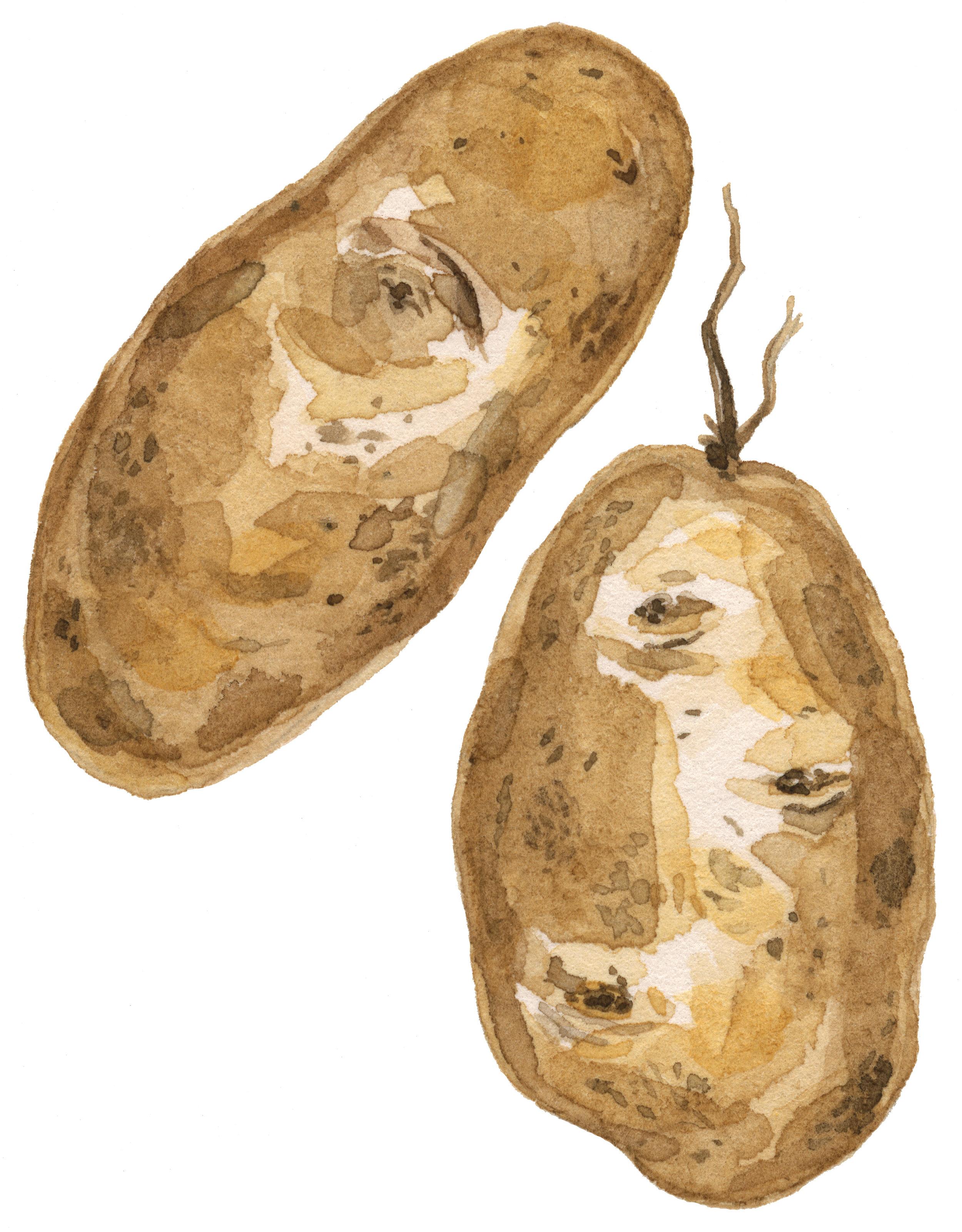 37-late-potatoes-lrg.jpg