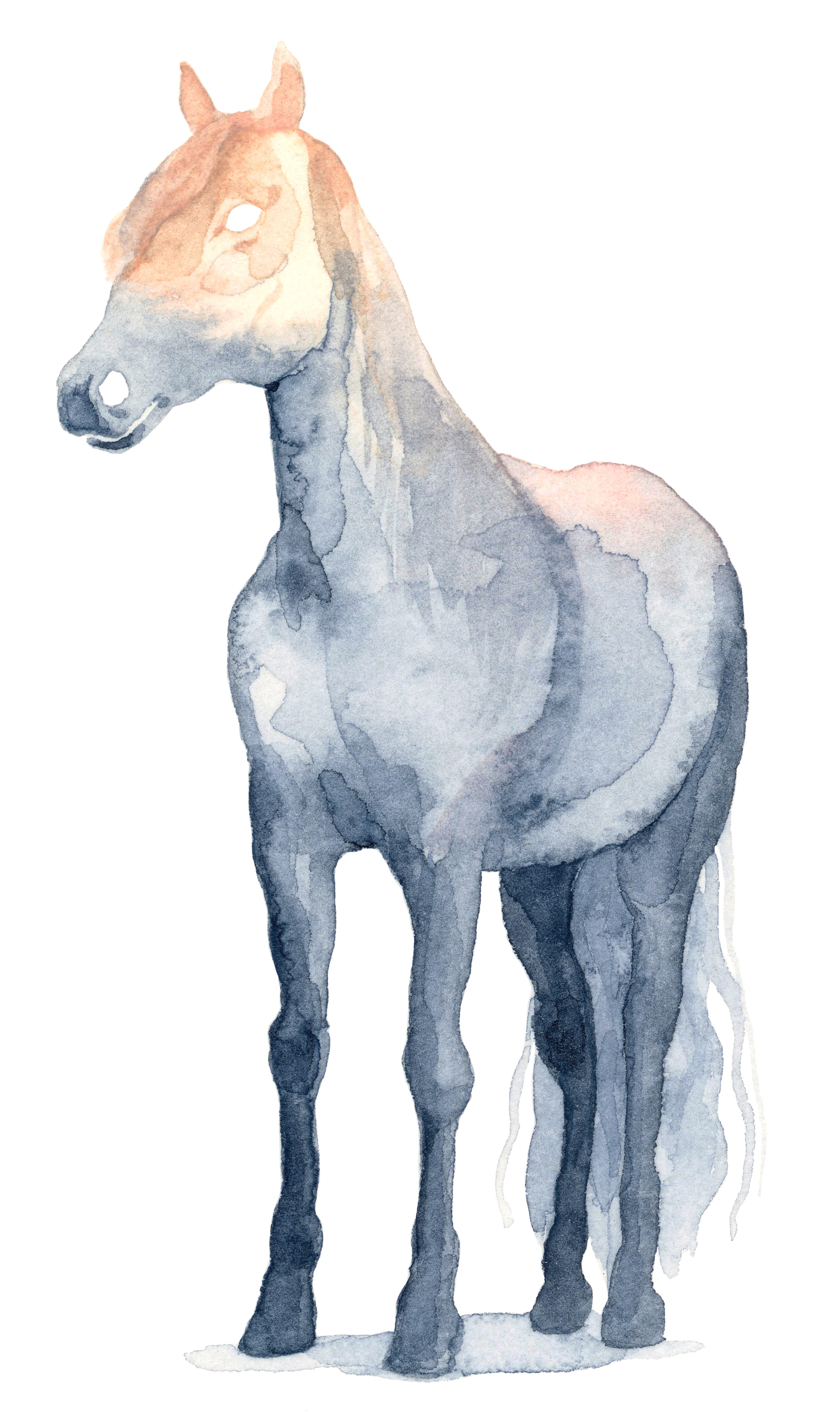 misty-horse-lrg.jpg