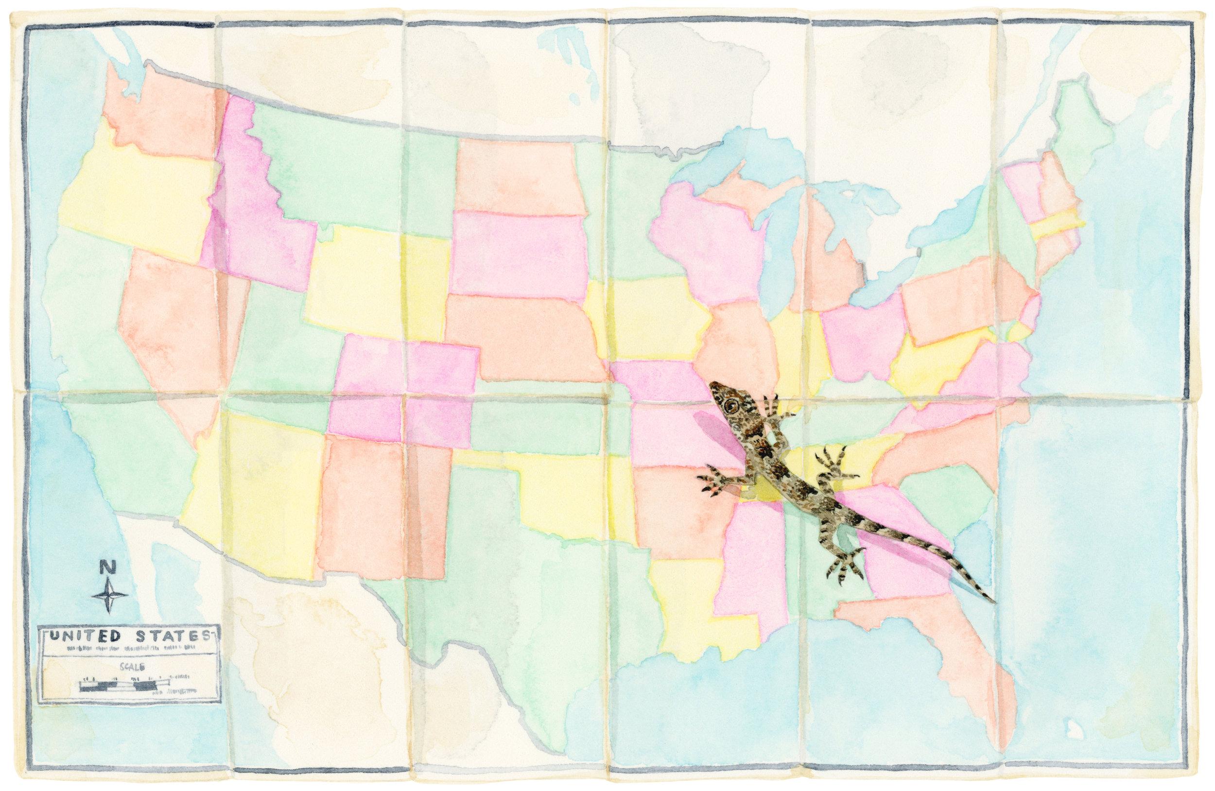 map-states-lizard-lrg.jpg
