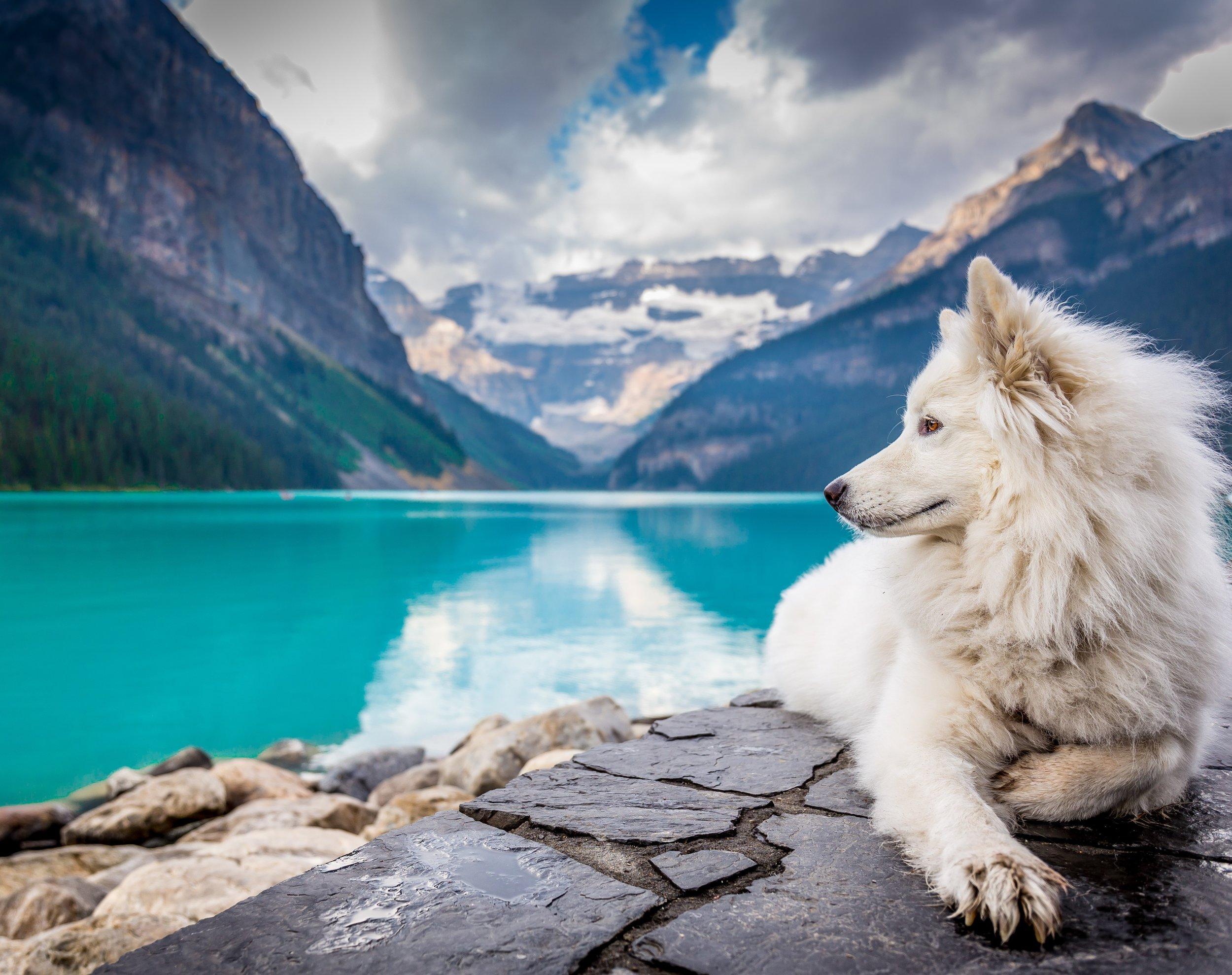 whitedoglandscape.jpg
