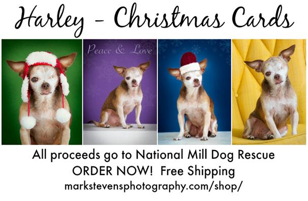 Harley National Mill Dog Rescue Spokesdog Greeting Cards