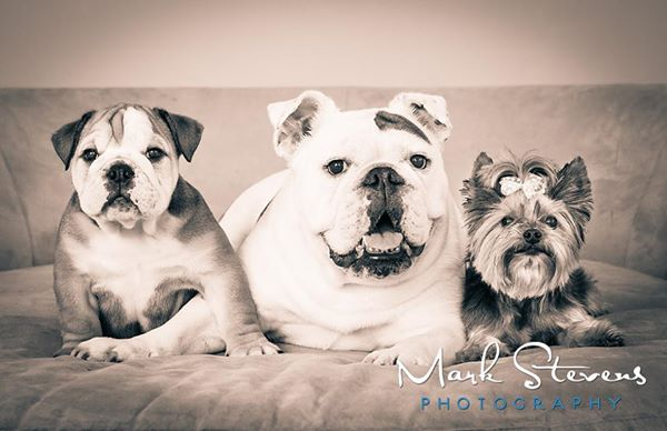 three-dogs-family-portrait-denver