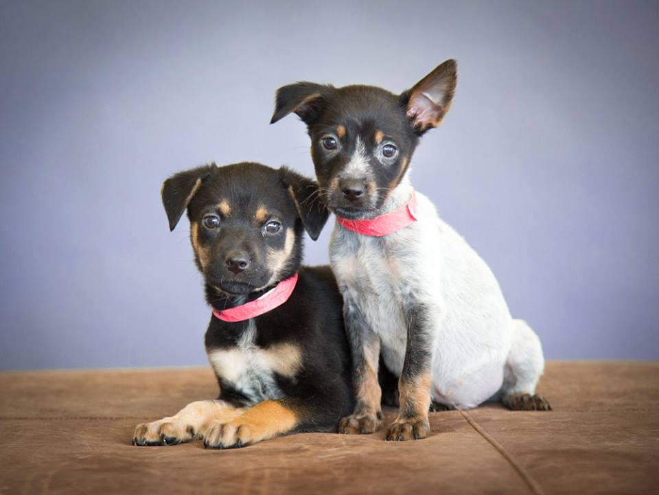 two-puppies-denver-dog-photographer