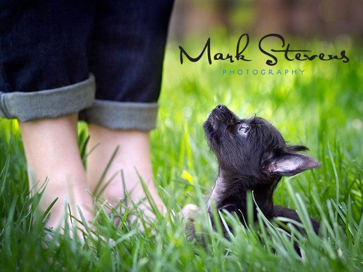 denver-puppy-photographer