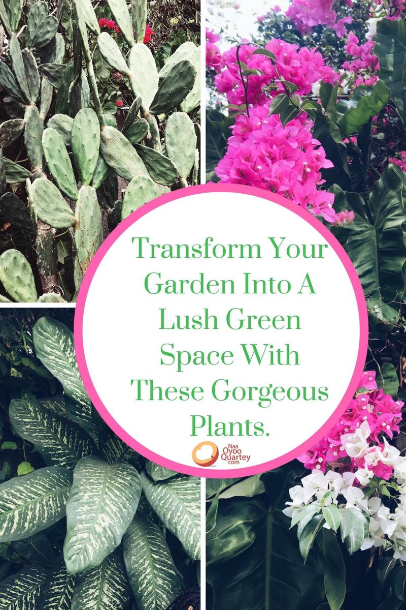 5 Garden Plants To Transform Your Home.jpg