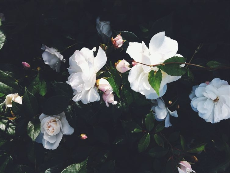 white and dark green:black floral.jpg