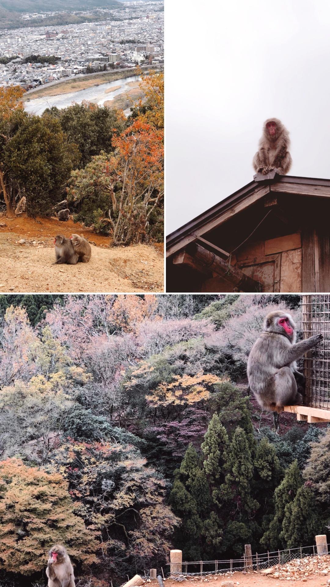 arayashiyama monkey park kyoto