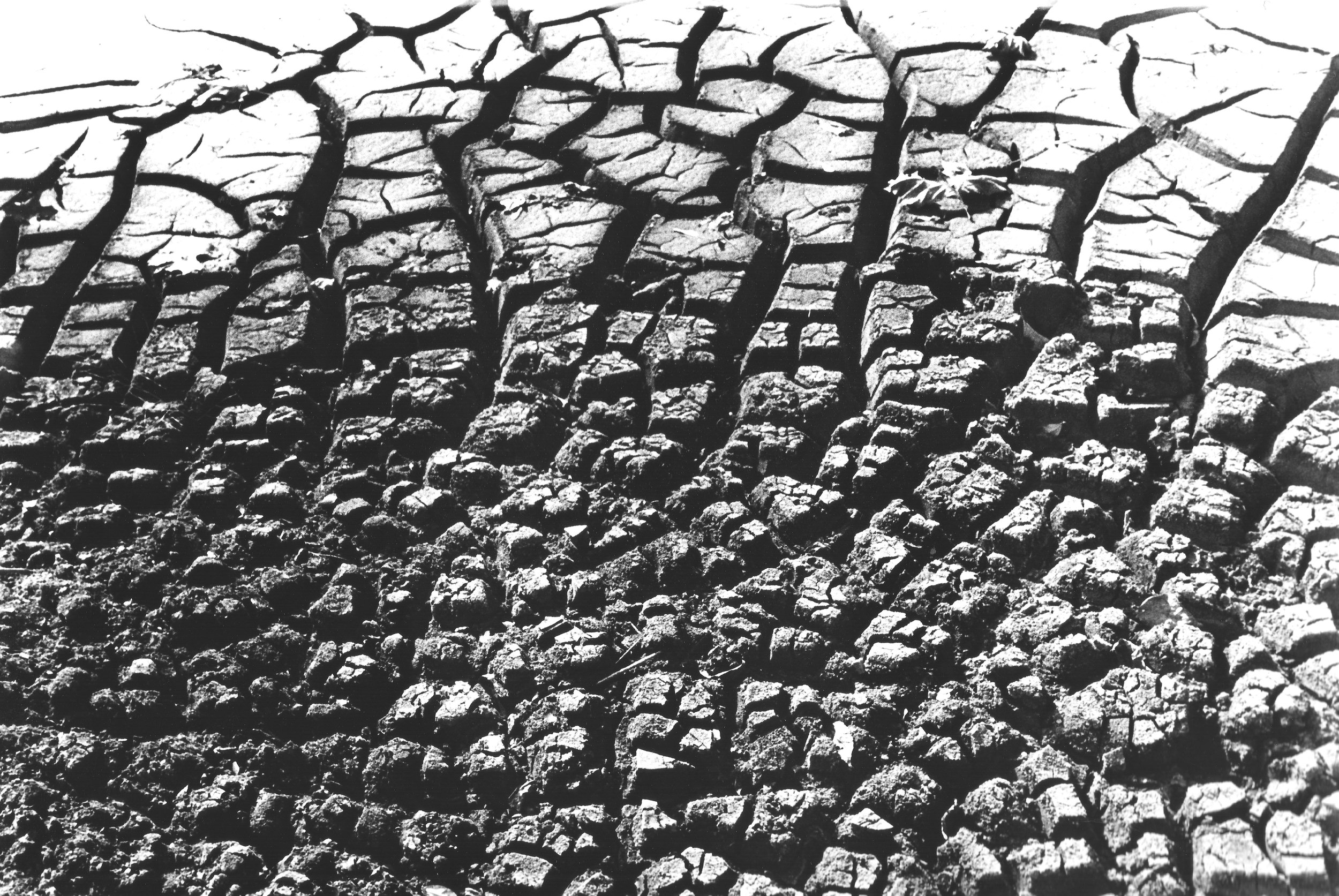 Mud Web