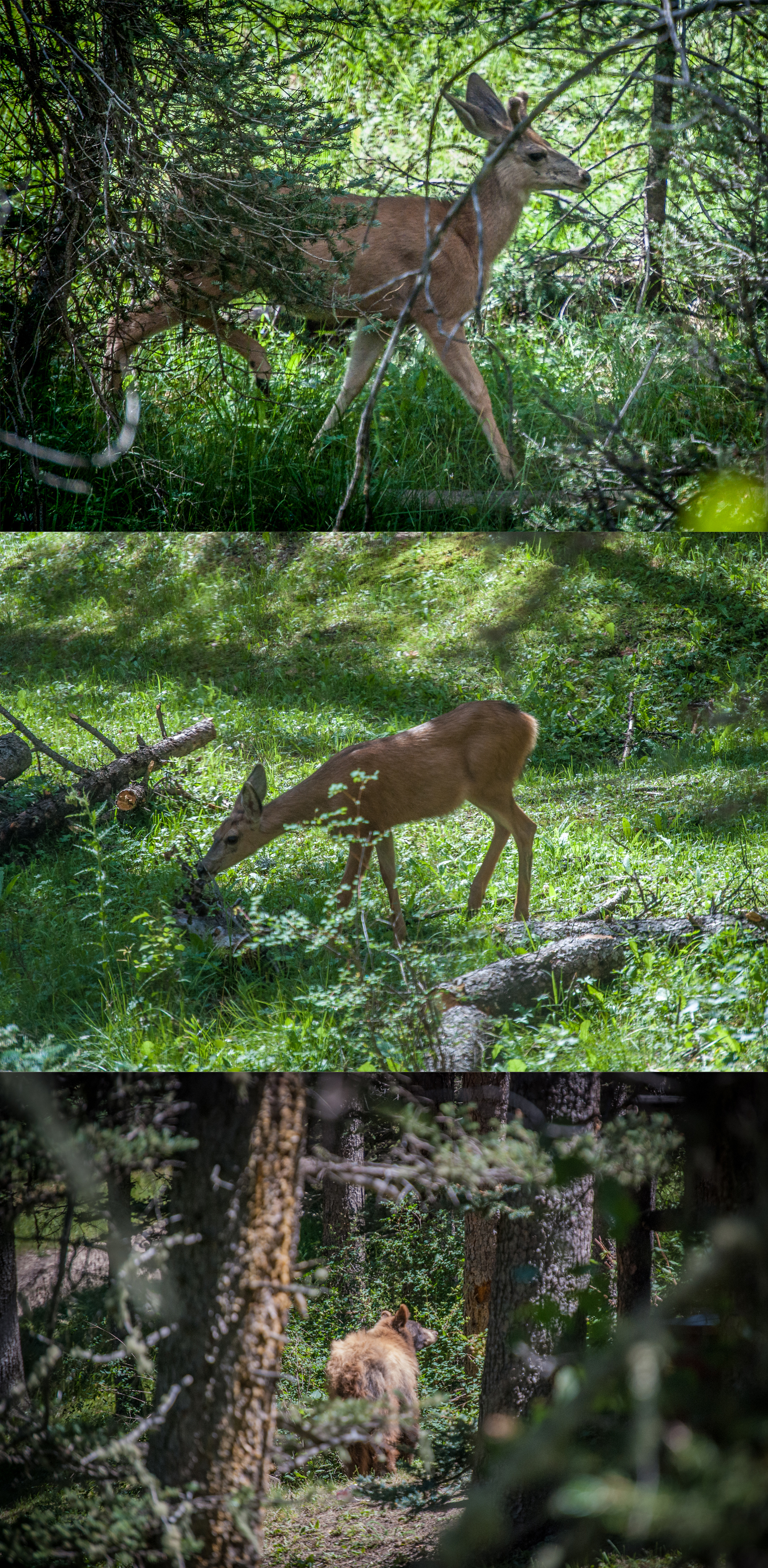 Photos by  Steve Burkett , wildlife provided by  The Carson National Forest .