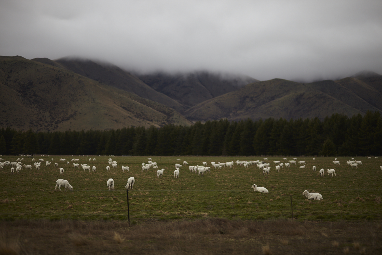 UNITED-NZ-1158.jpg
