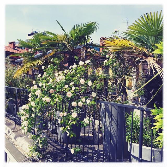 Ogród na dachu 10 Corso Como/Instagram: @10corsocomo